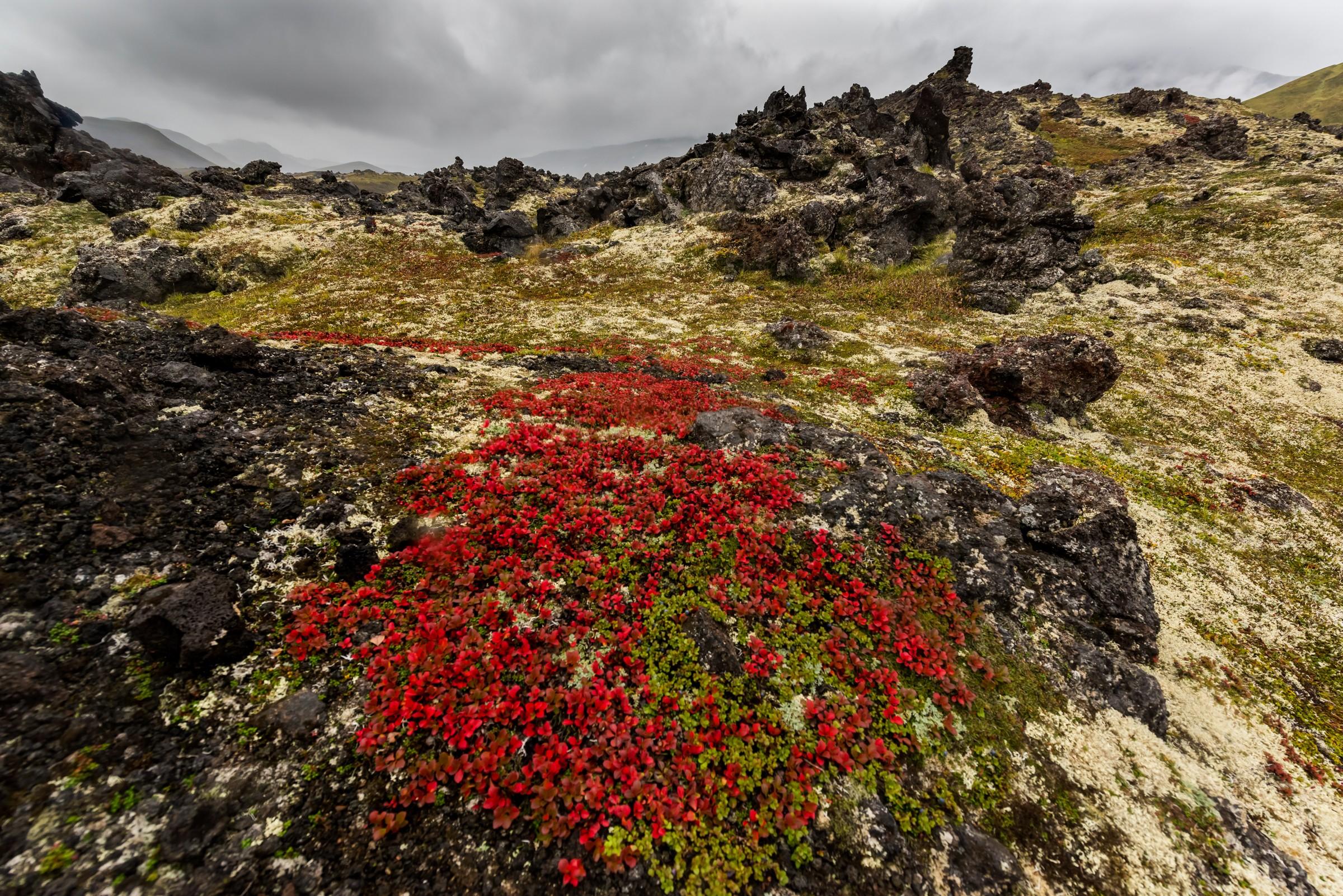 landschap kamchatka 4115