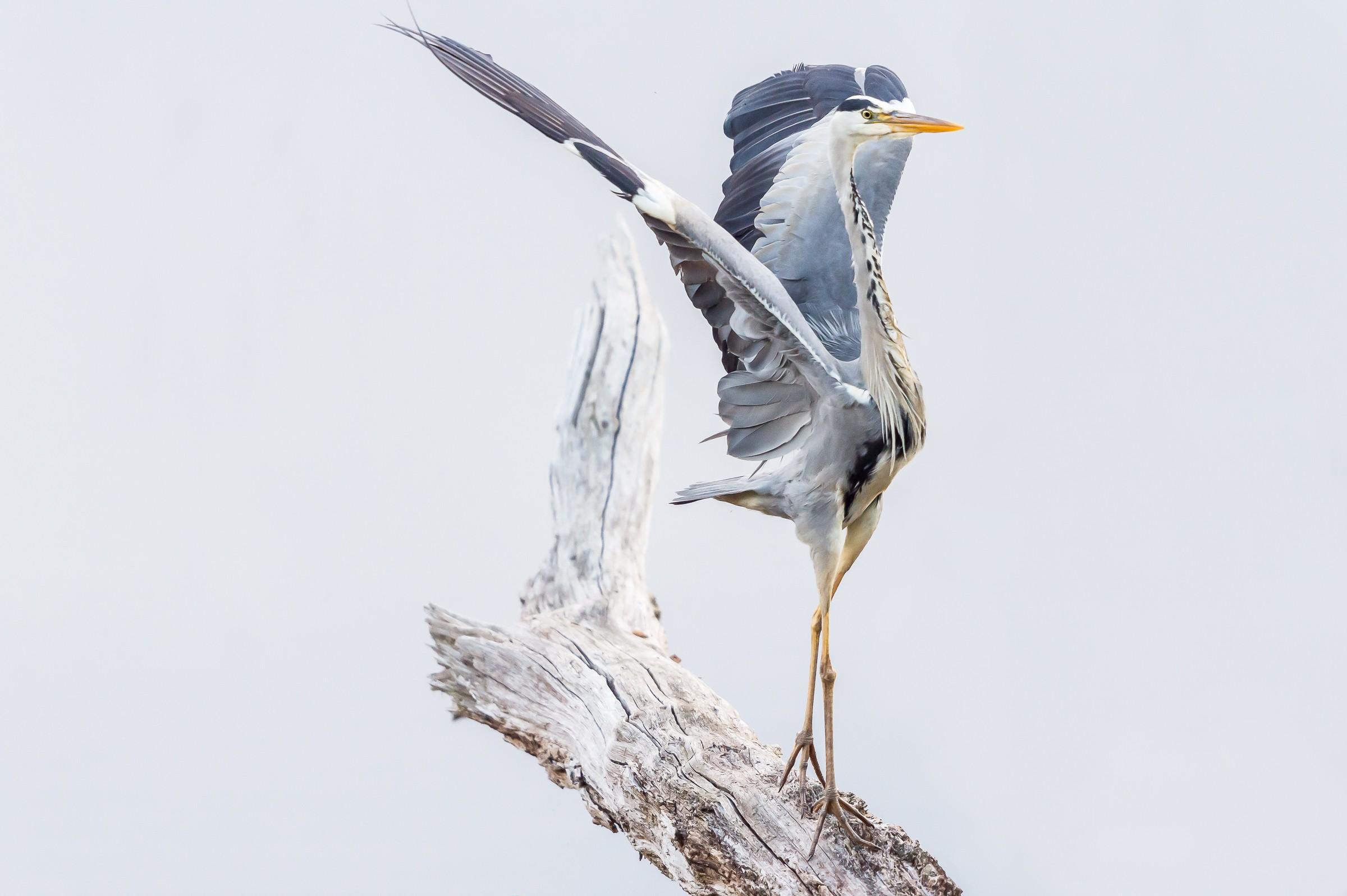 vogels BHW 9889
