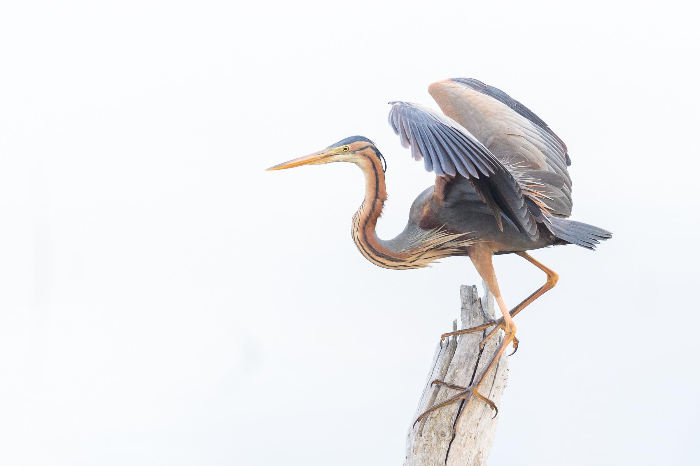 vogels BHW 0922
