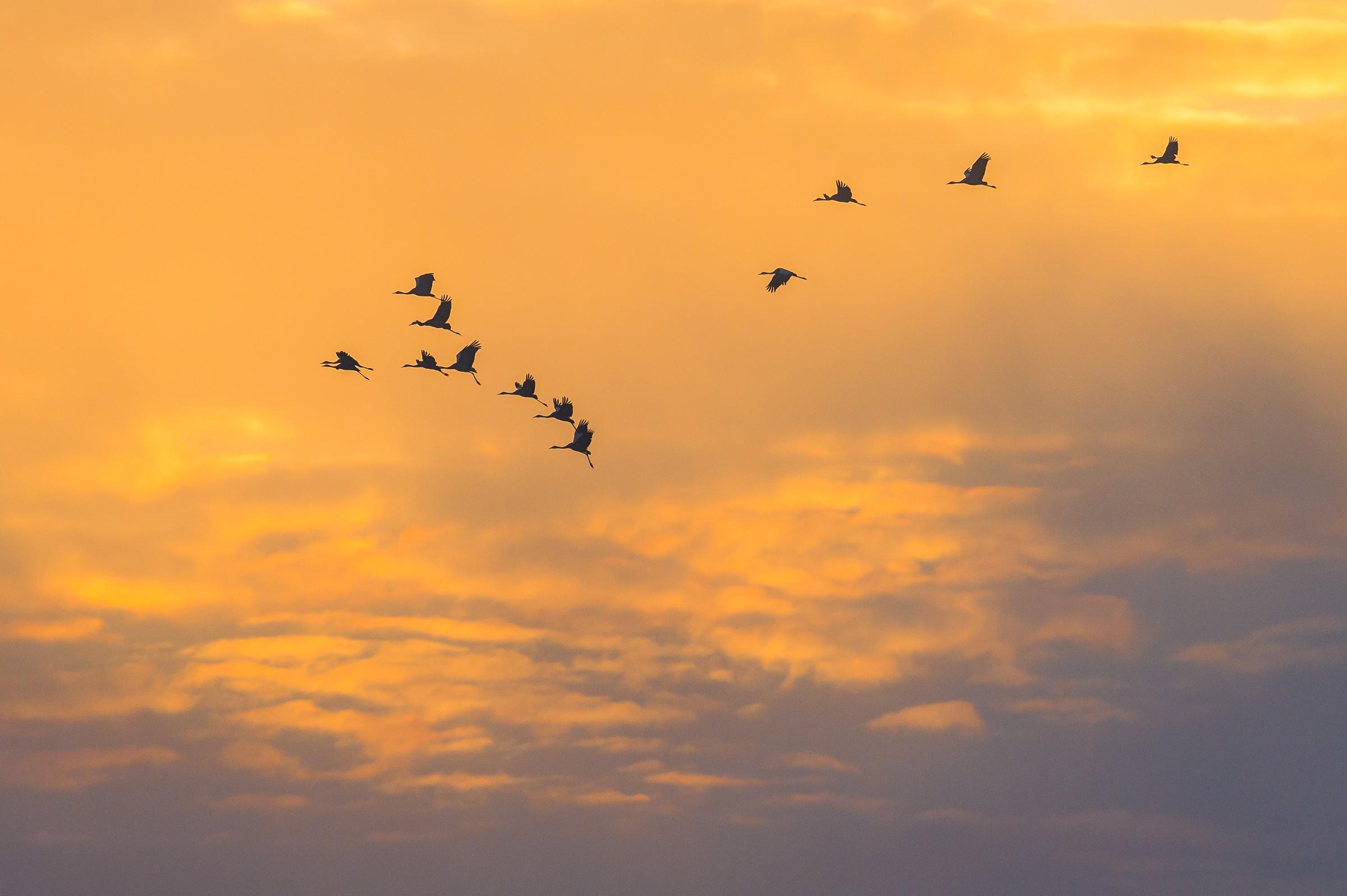 vogels BHW 9652
