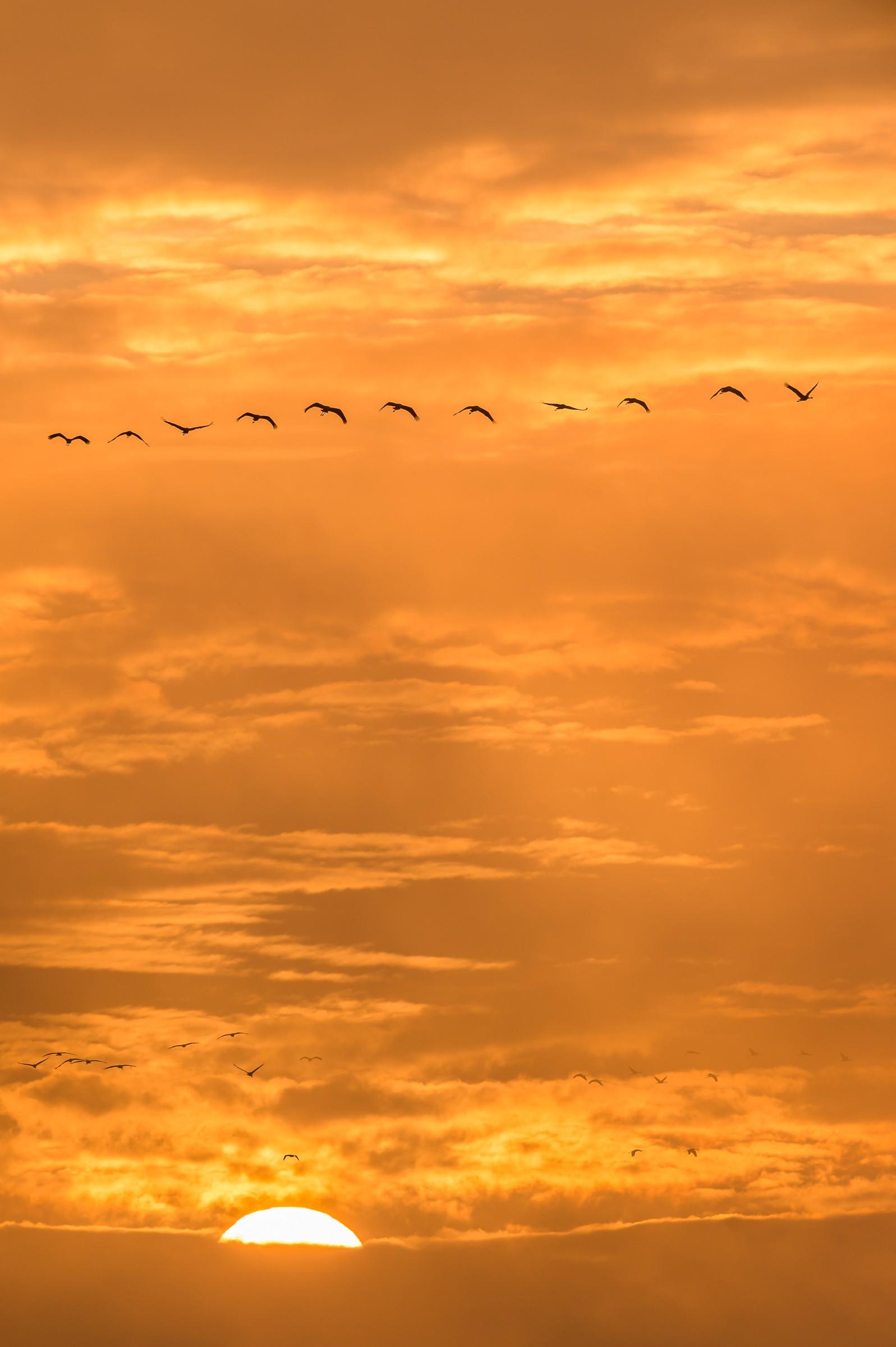 vogels BHW 9685