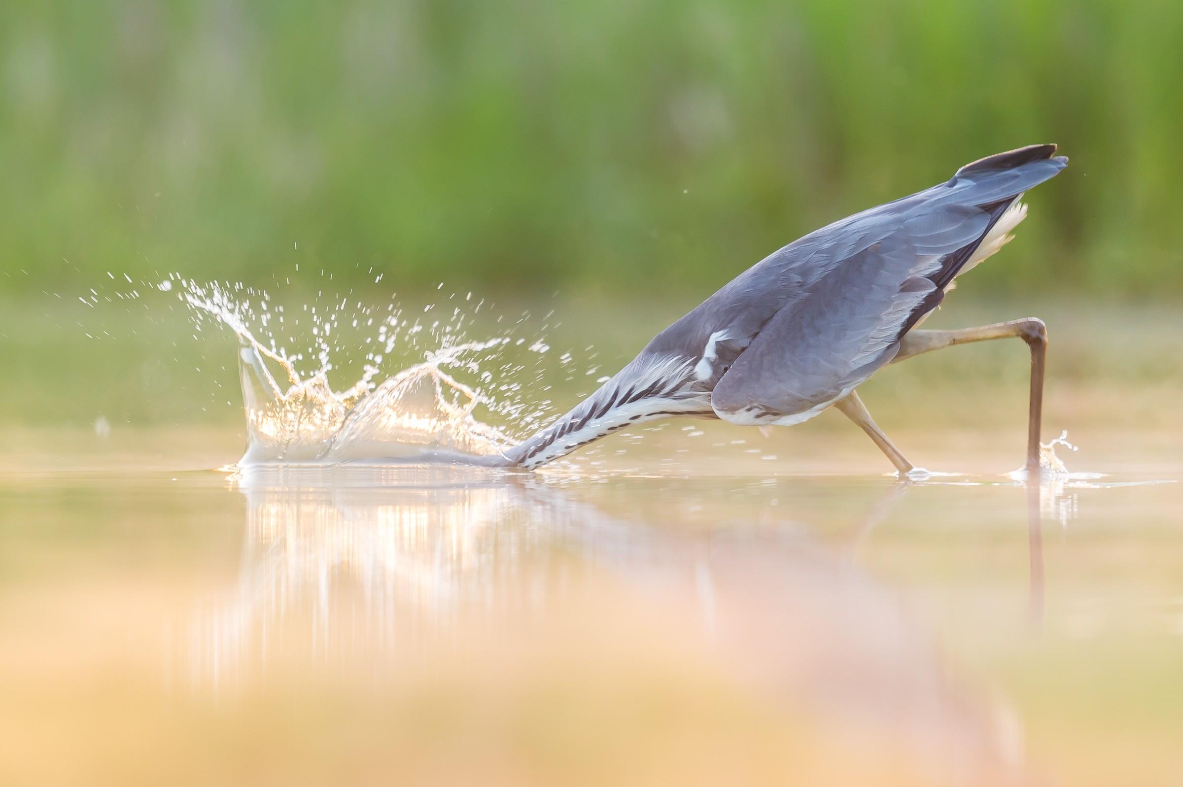 vogels BHW 8469