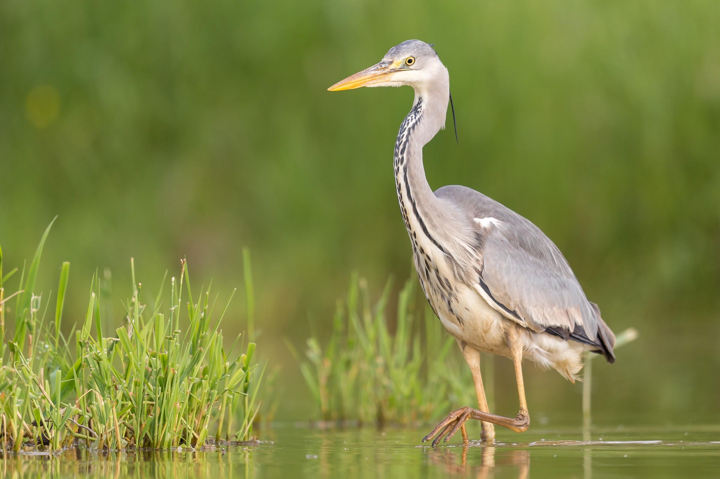 vogels BHW 9051