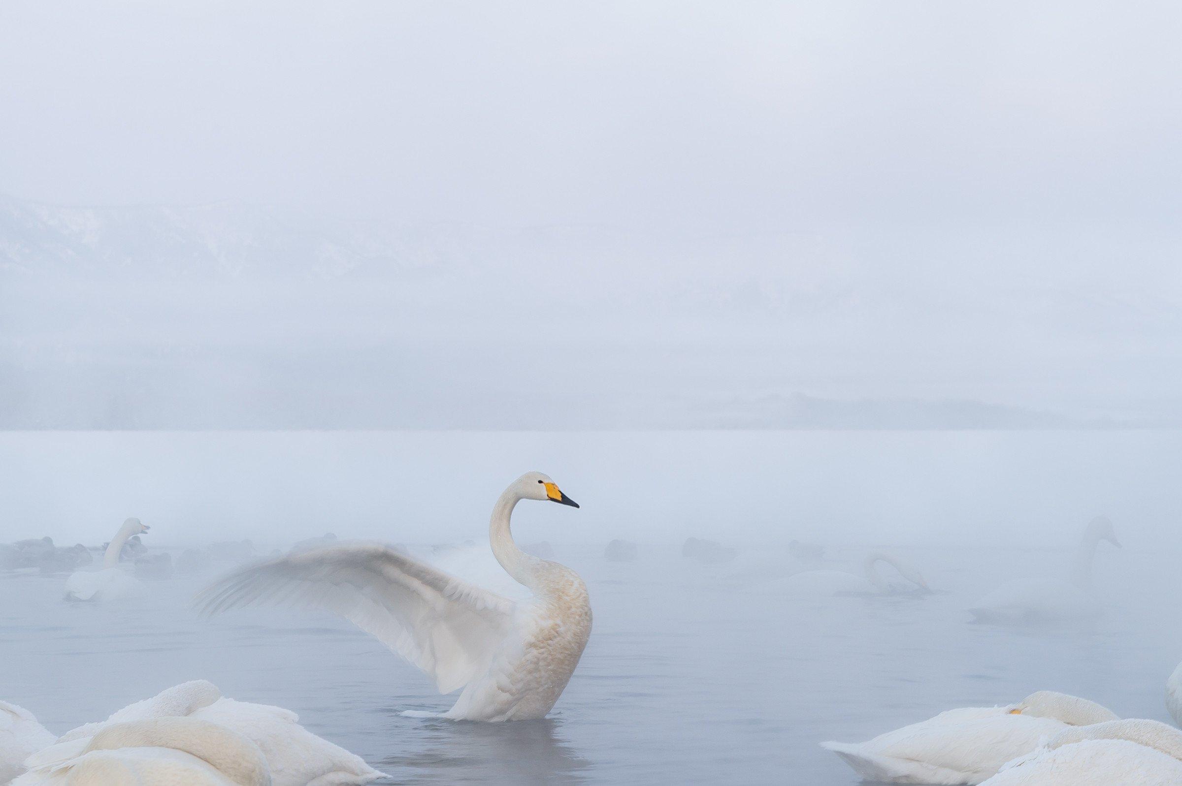 vogels BHW 9522