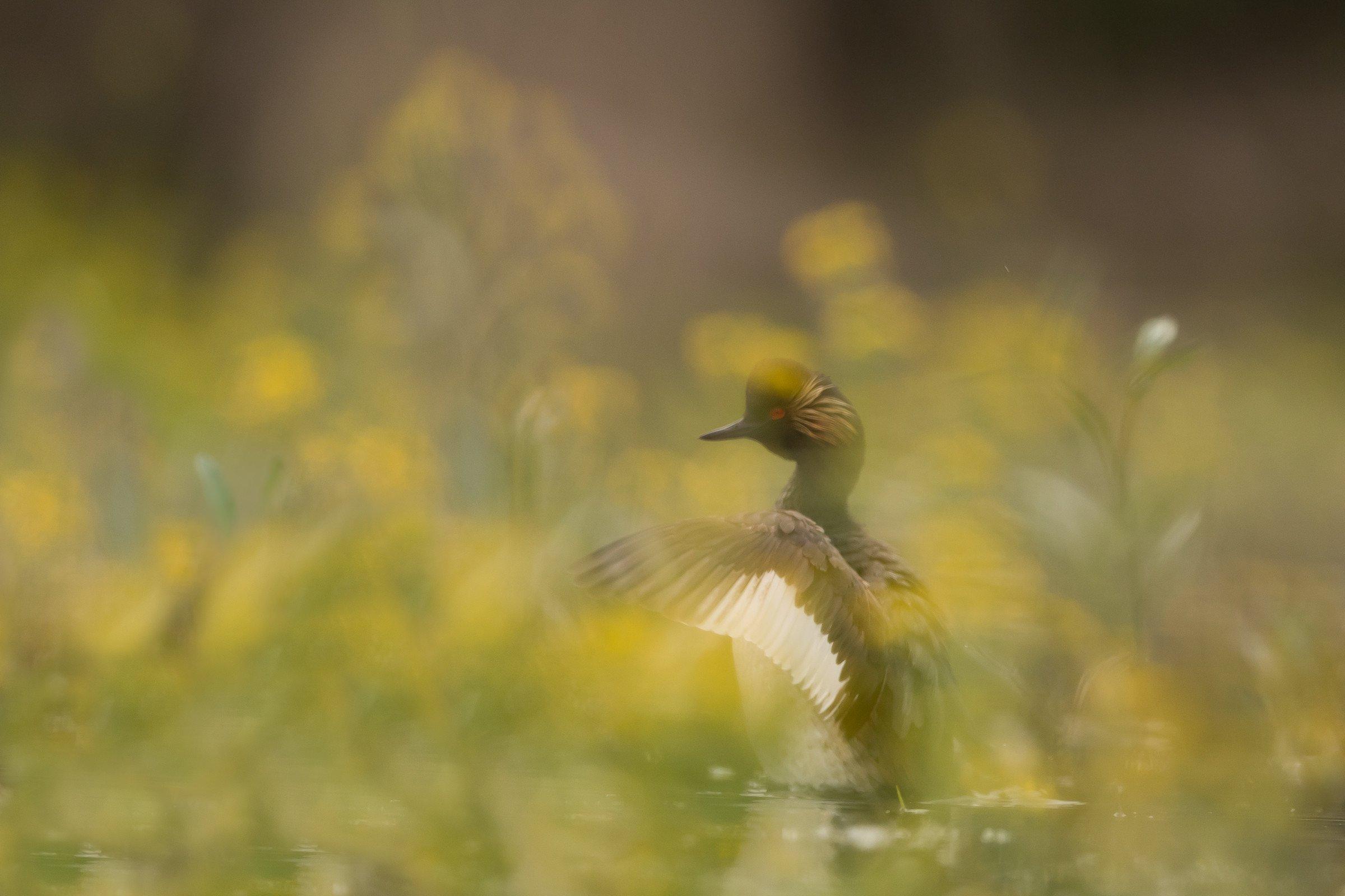 vogels BHW 1044