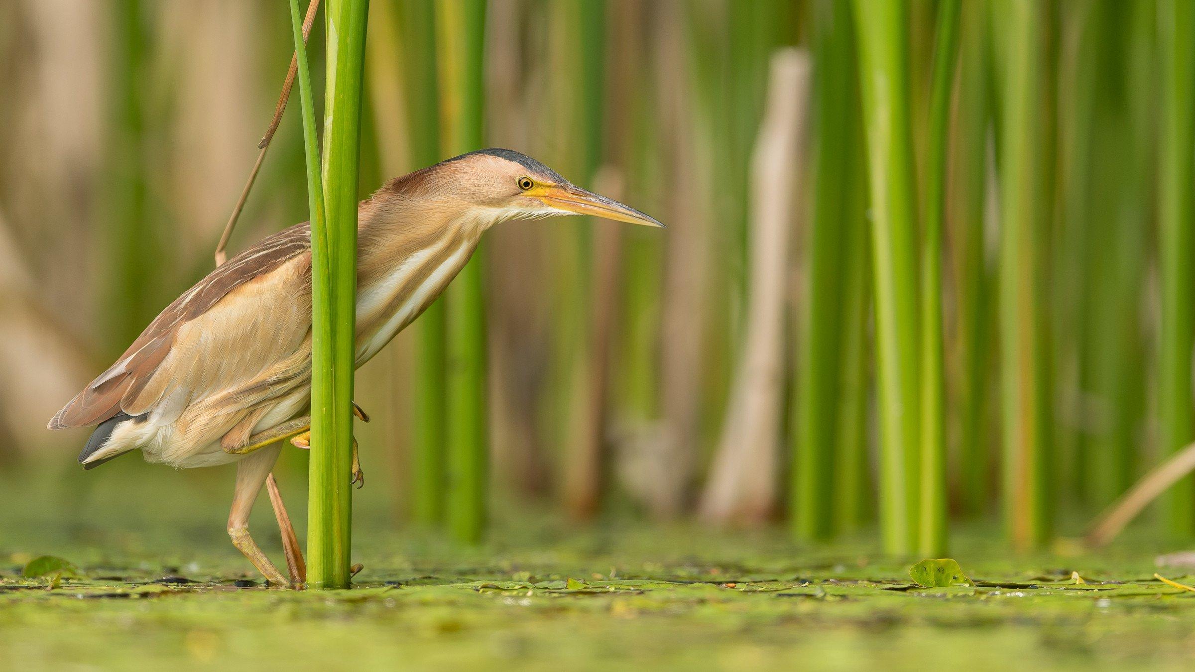 vogels BHW 3184