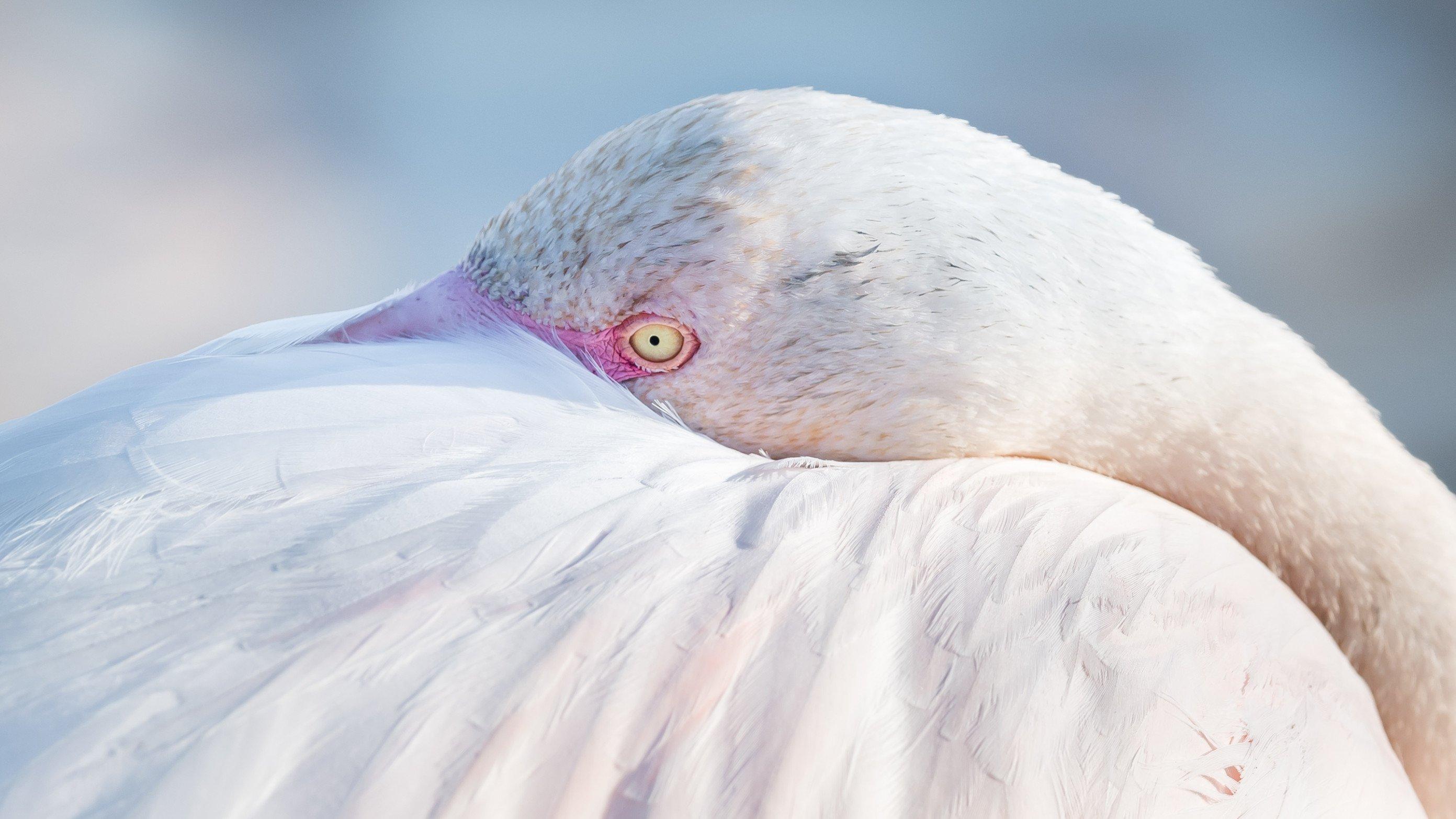 vogels BHW 6093