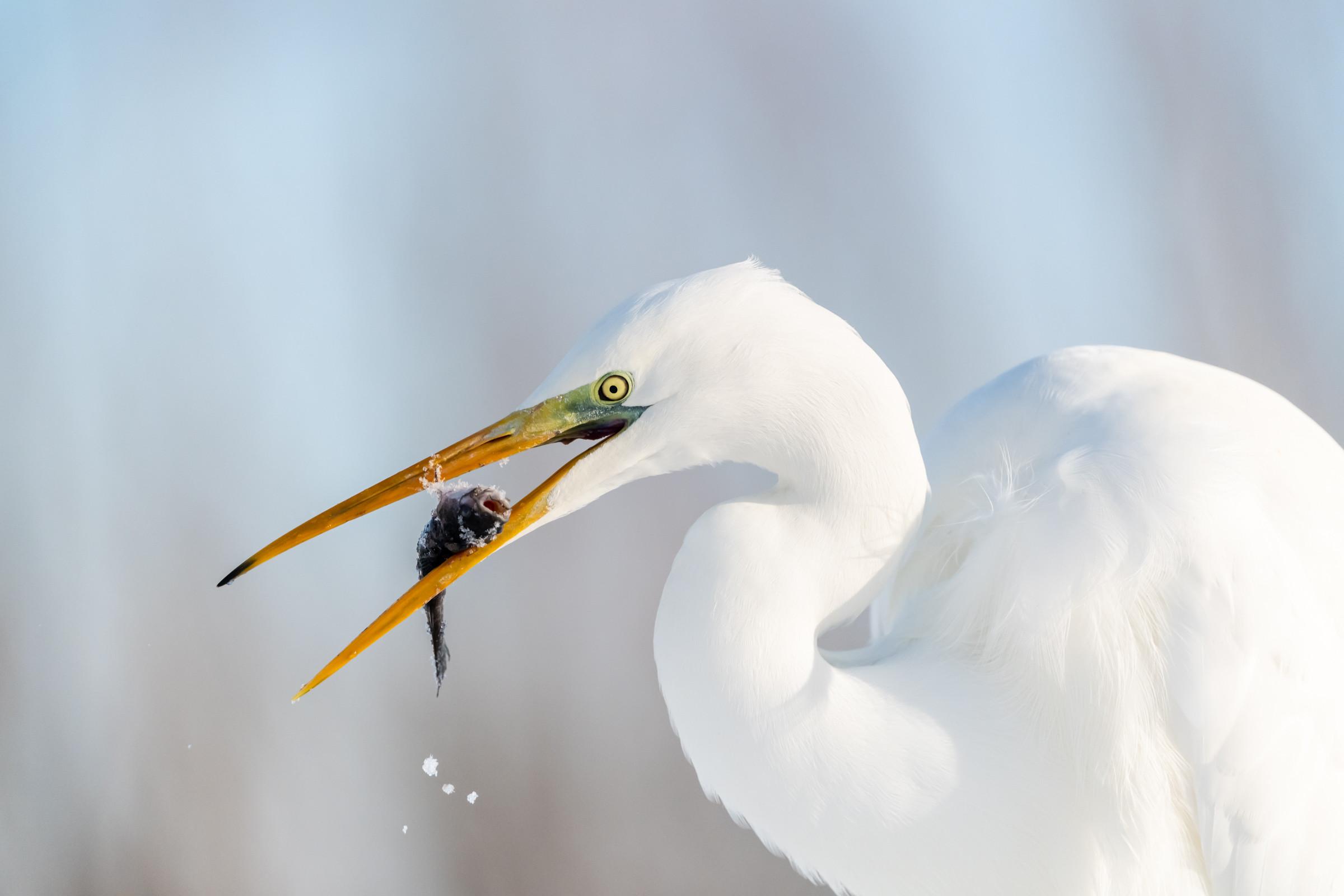 vogels BHW 5850
