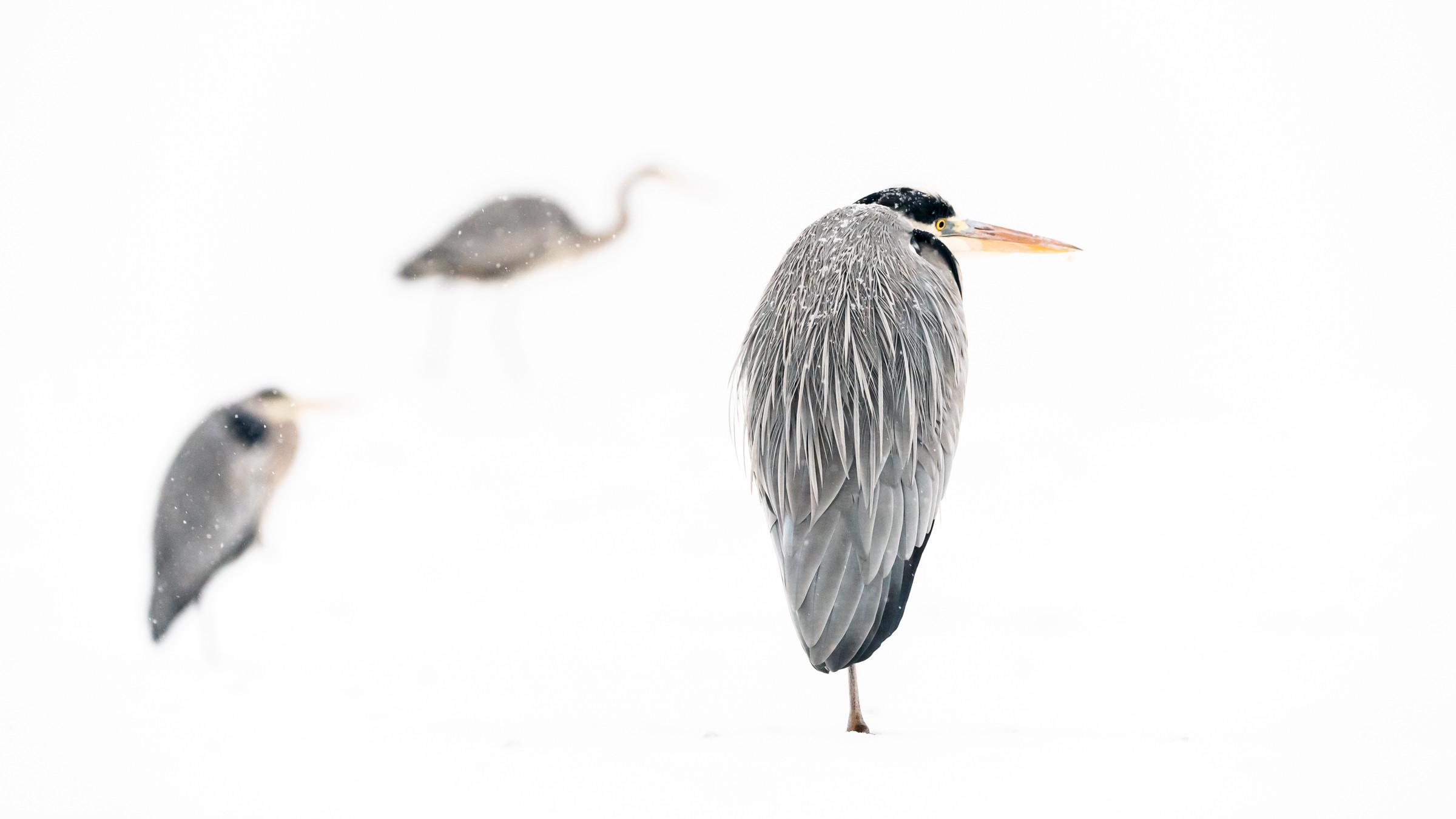 vogels BHW 8148