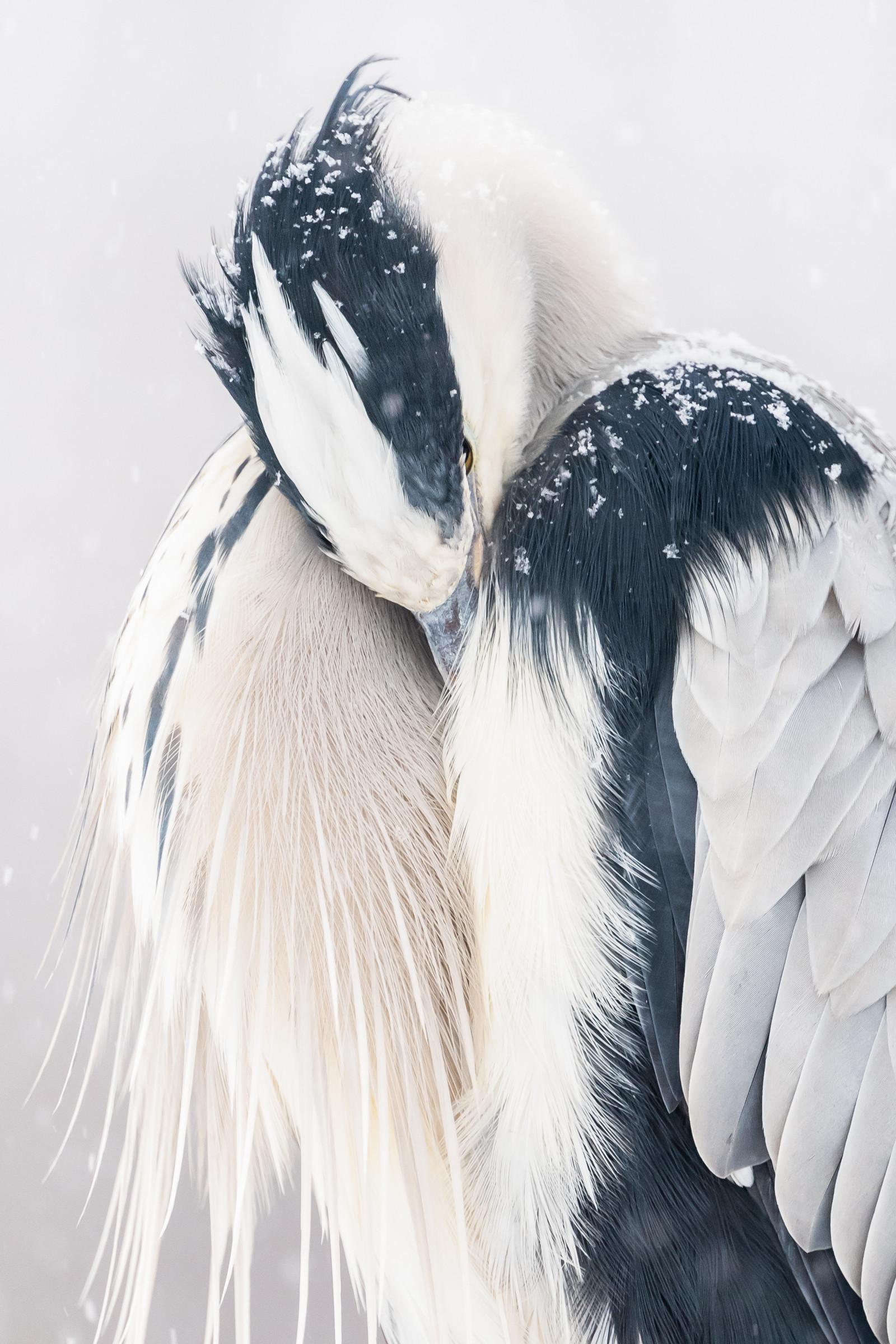 vogels BHW 8113