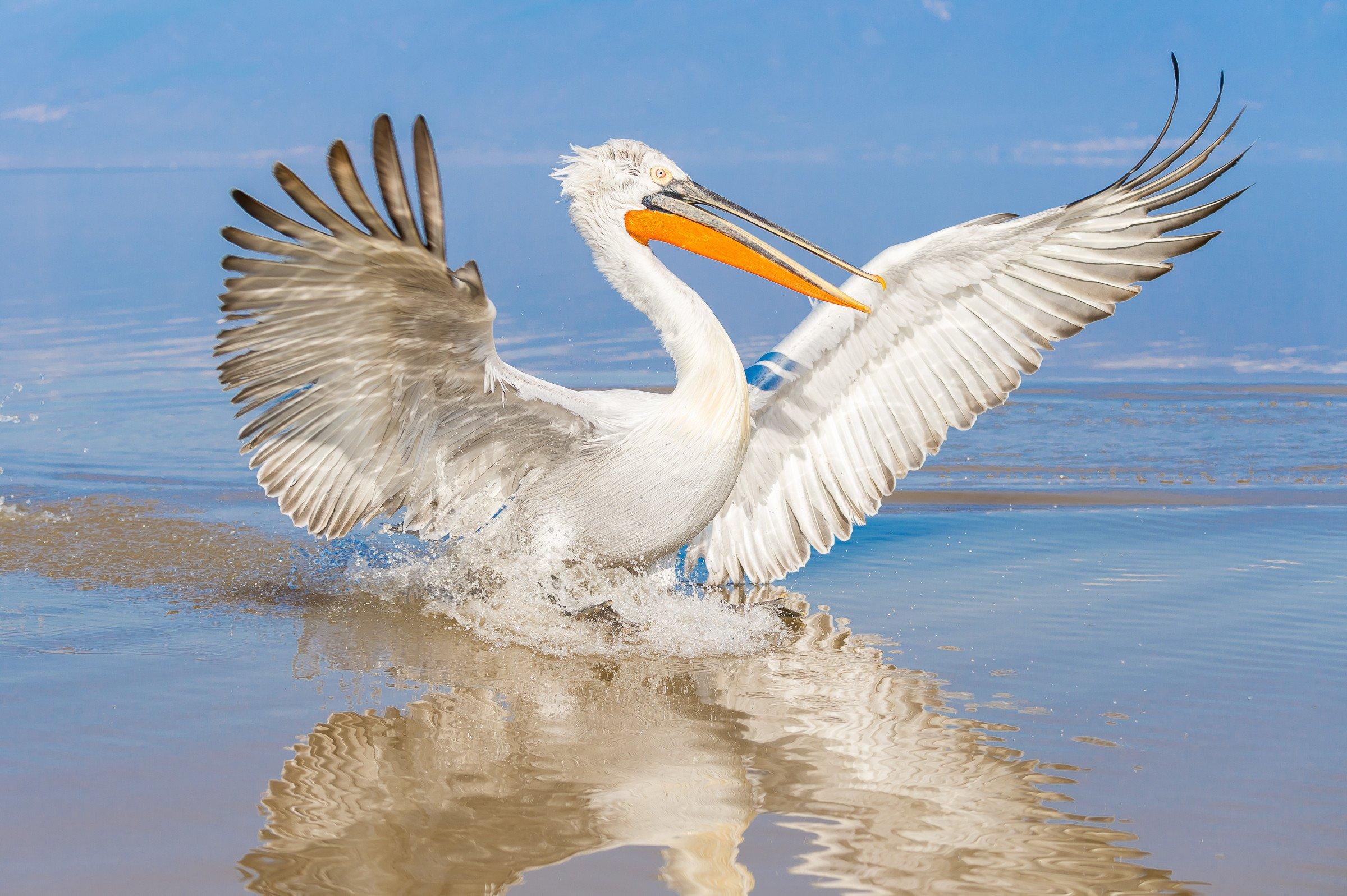 vogels BHW 8222