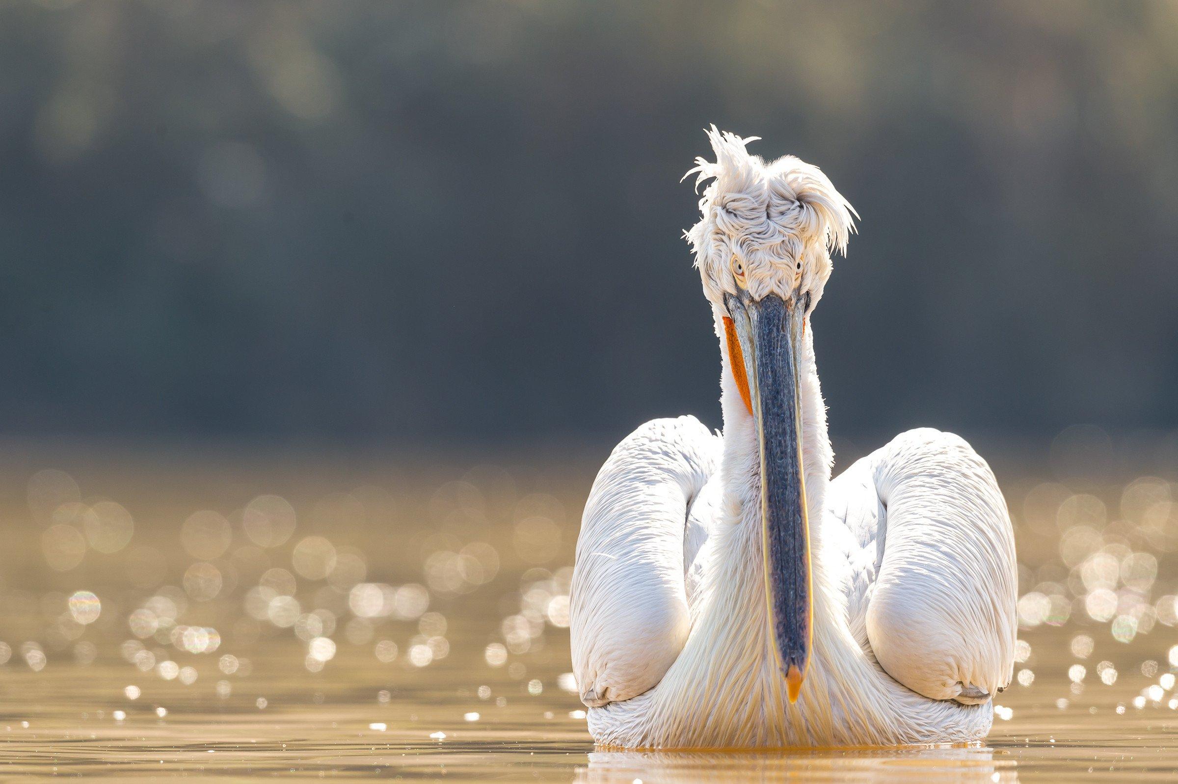 vogels BHW 8770