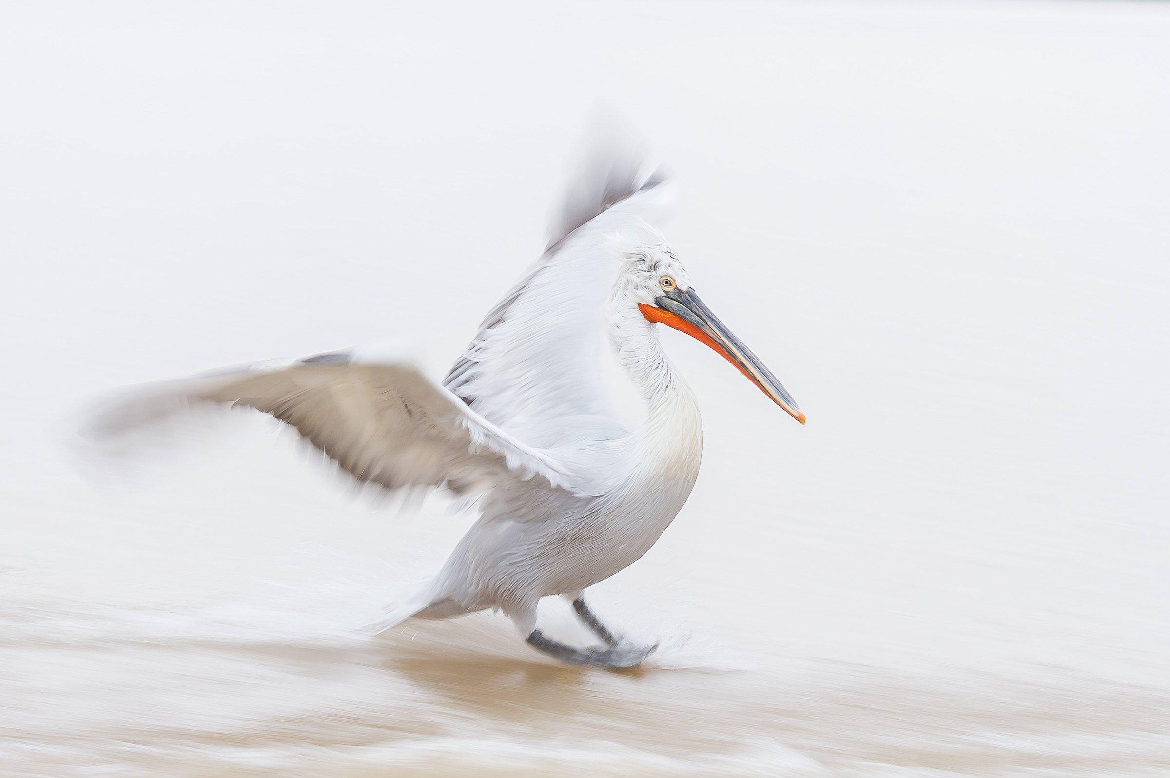 vogels BHW 7398