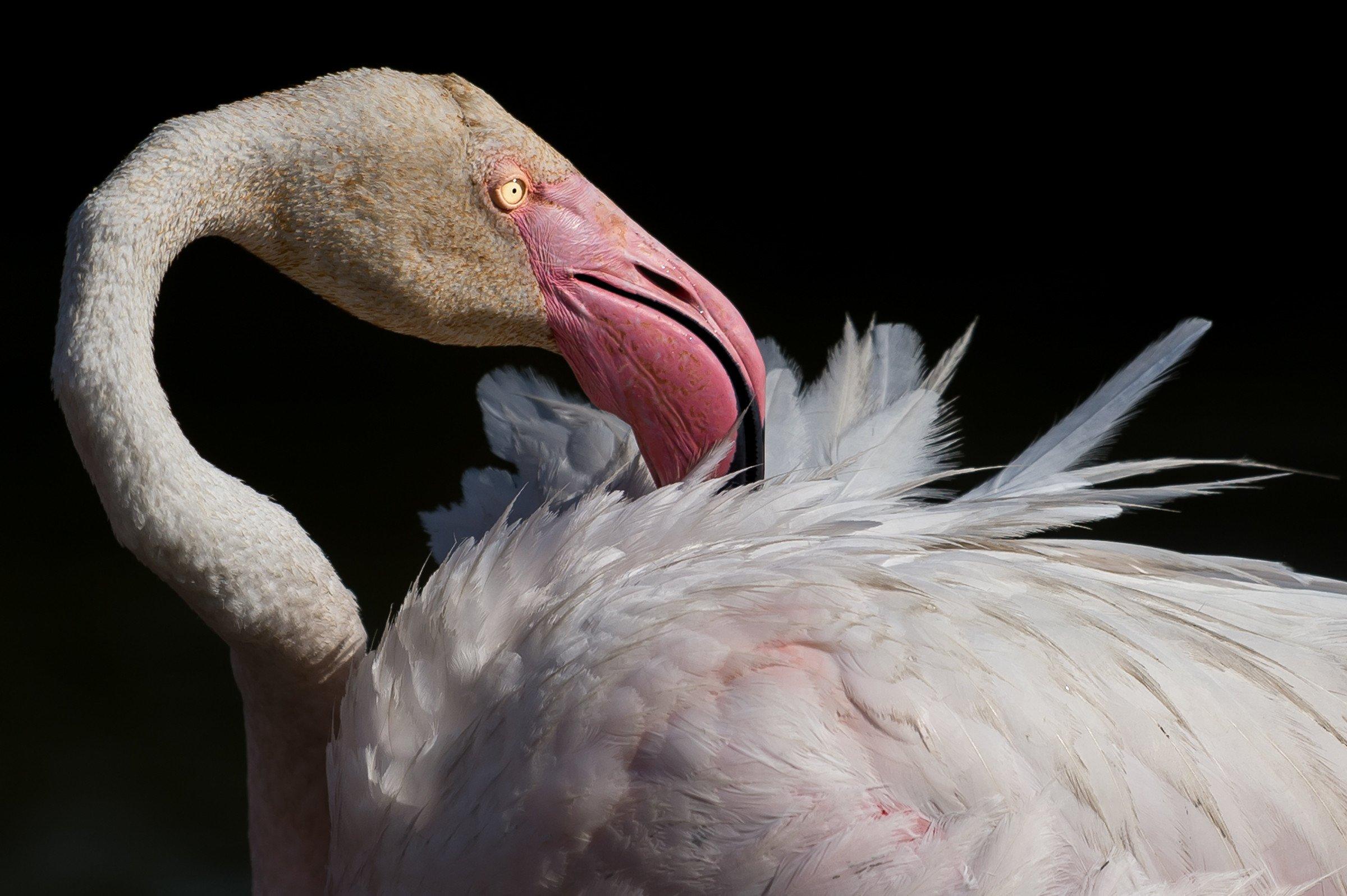 vogels BHW 2944