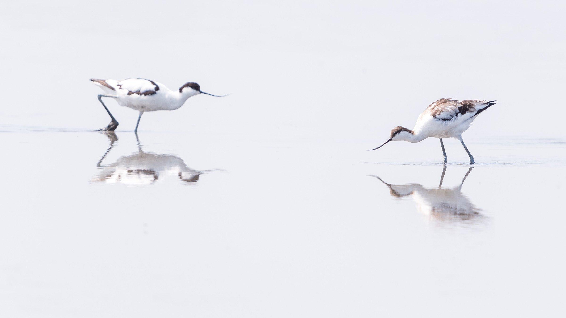 vogels BHW 3483