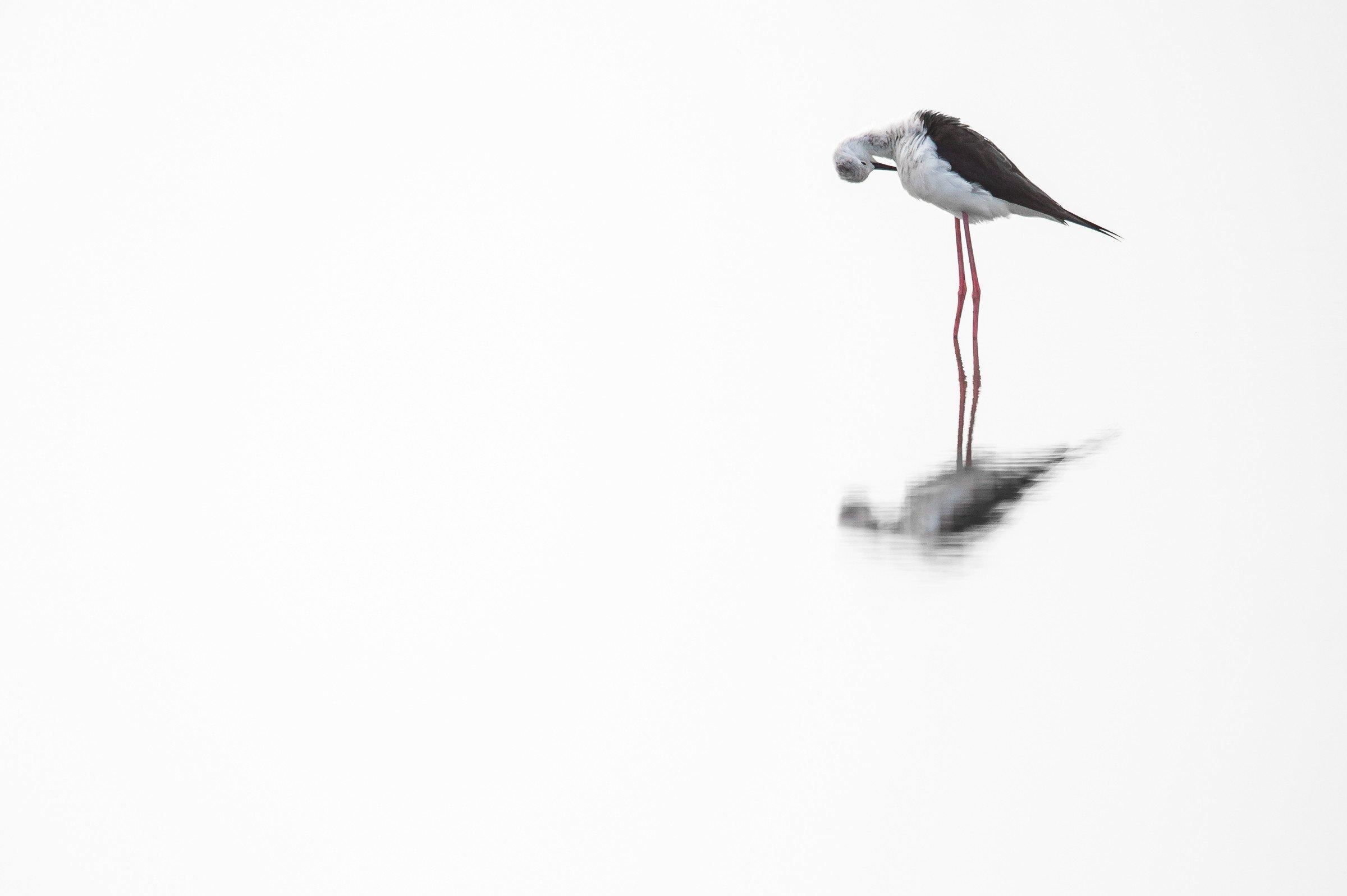 vogels BHW 6107