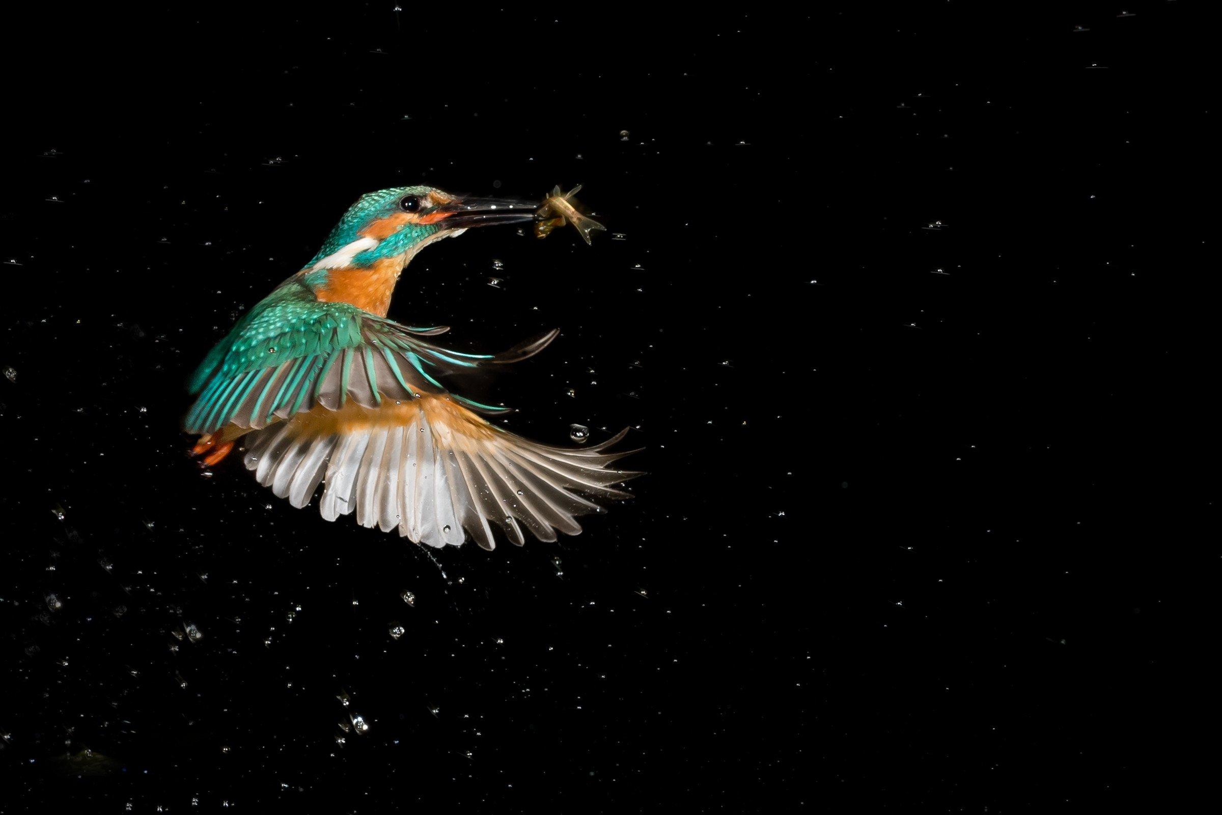 vogels BHW 0947