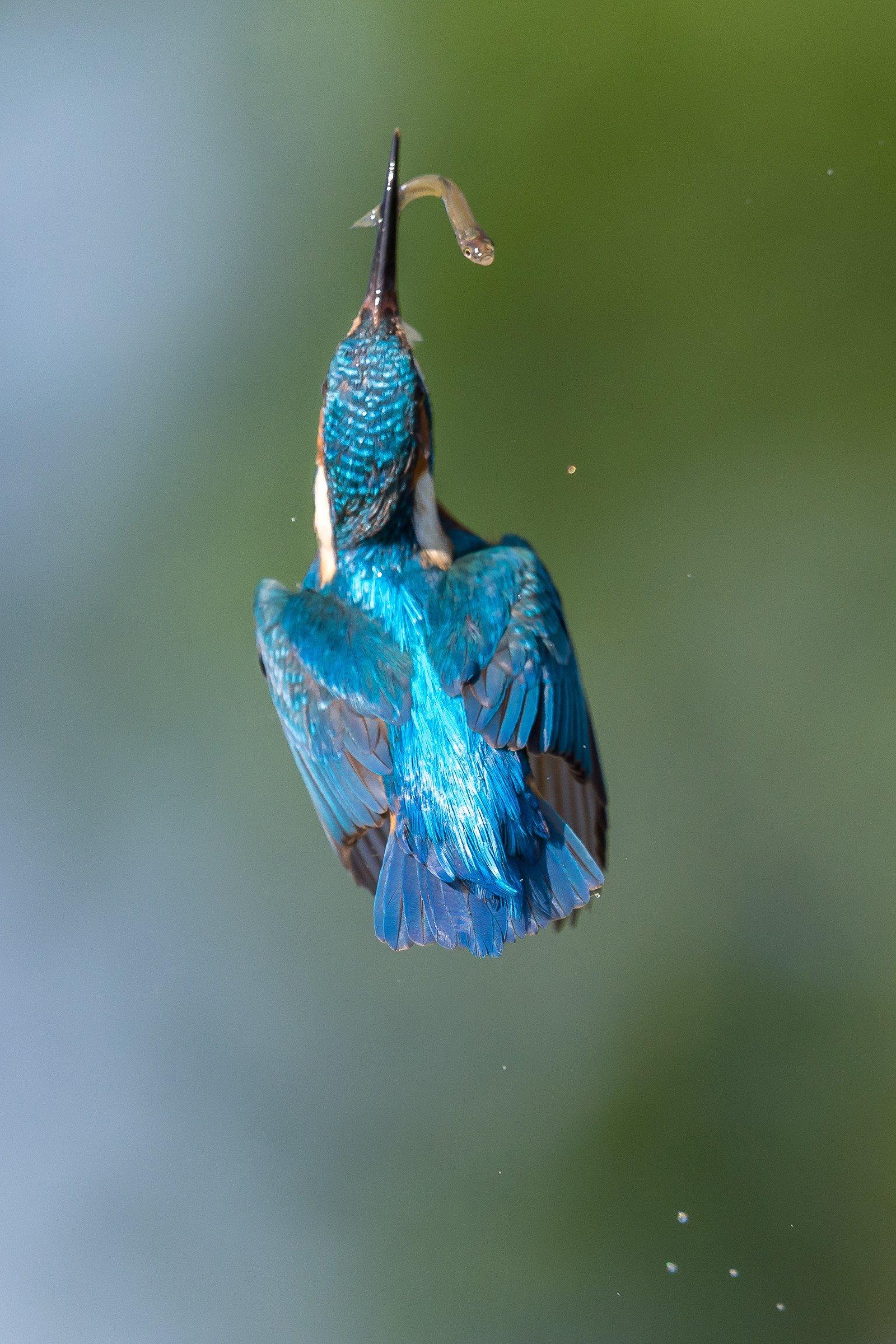 vogel BHW 0546