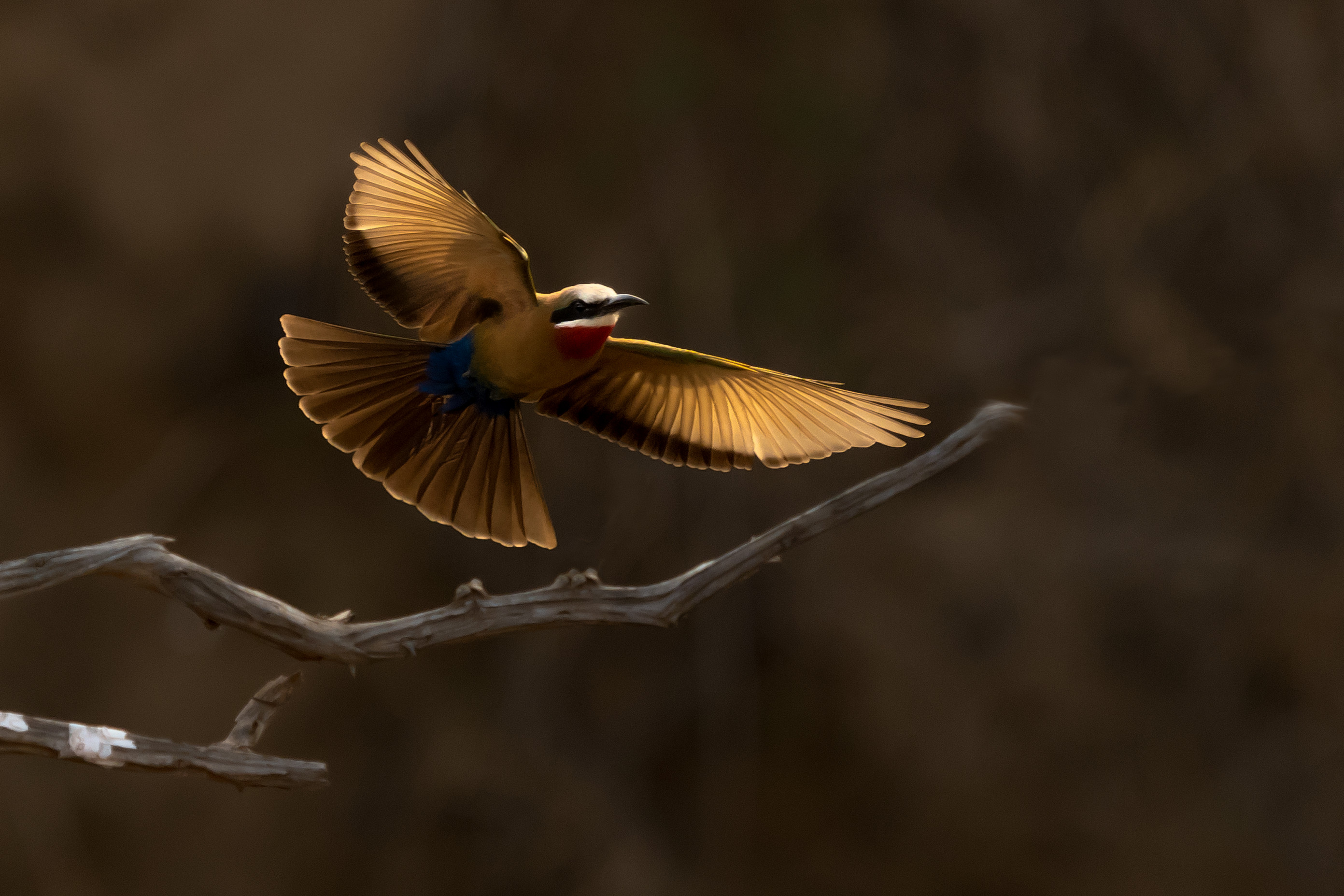 vogels zimanga 0757
