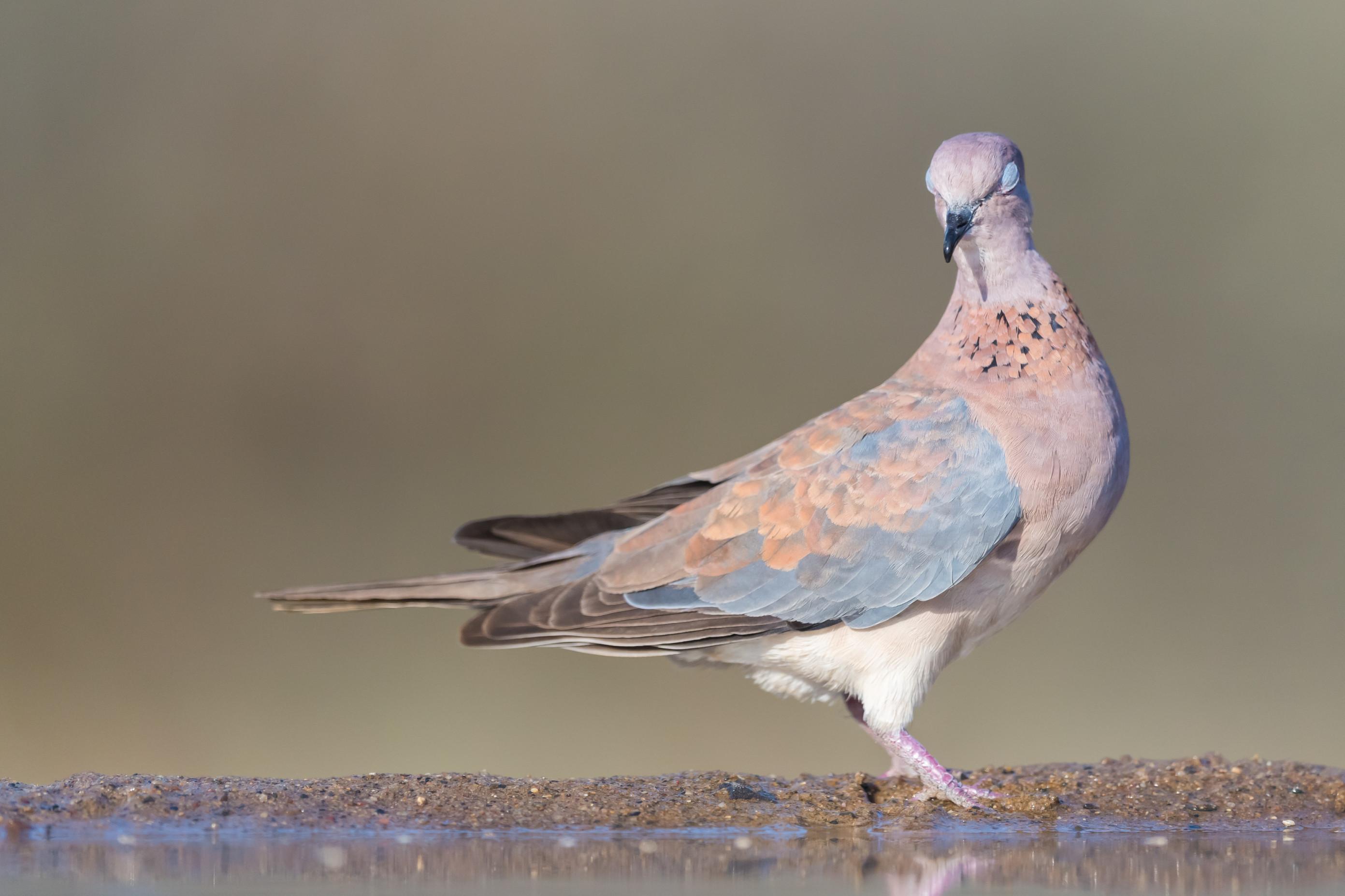 vogels afrika 0646