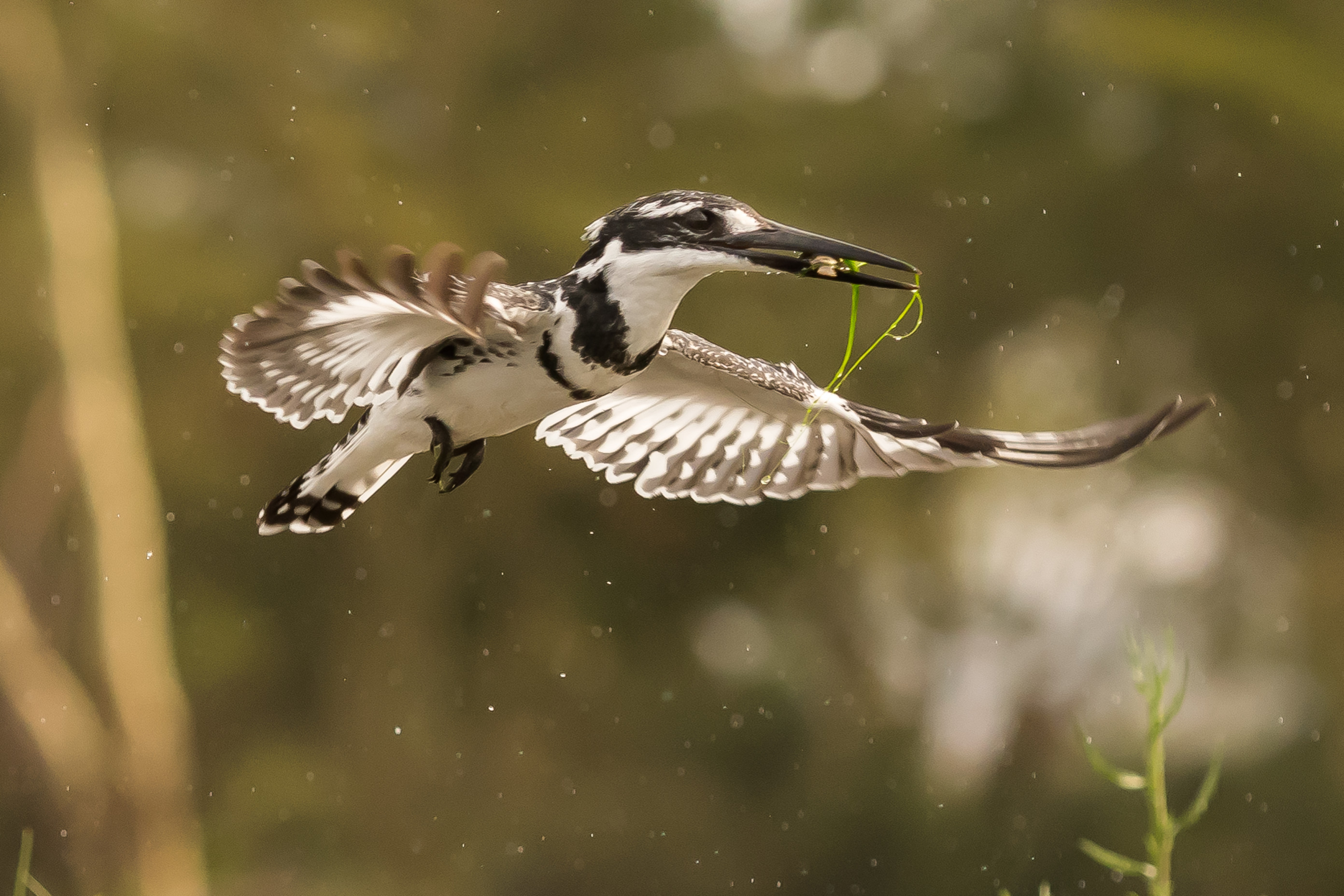 vogels afrika 1706
