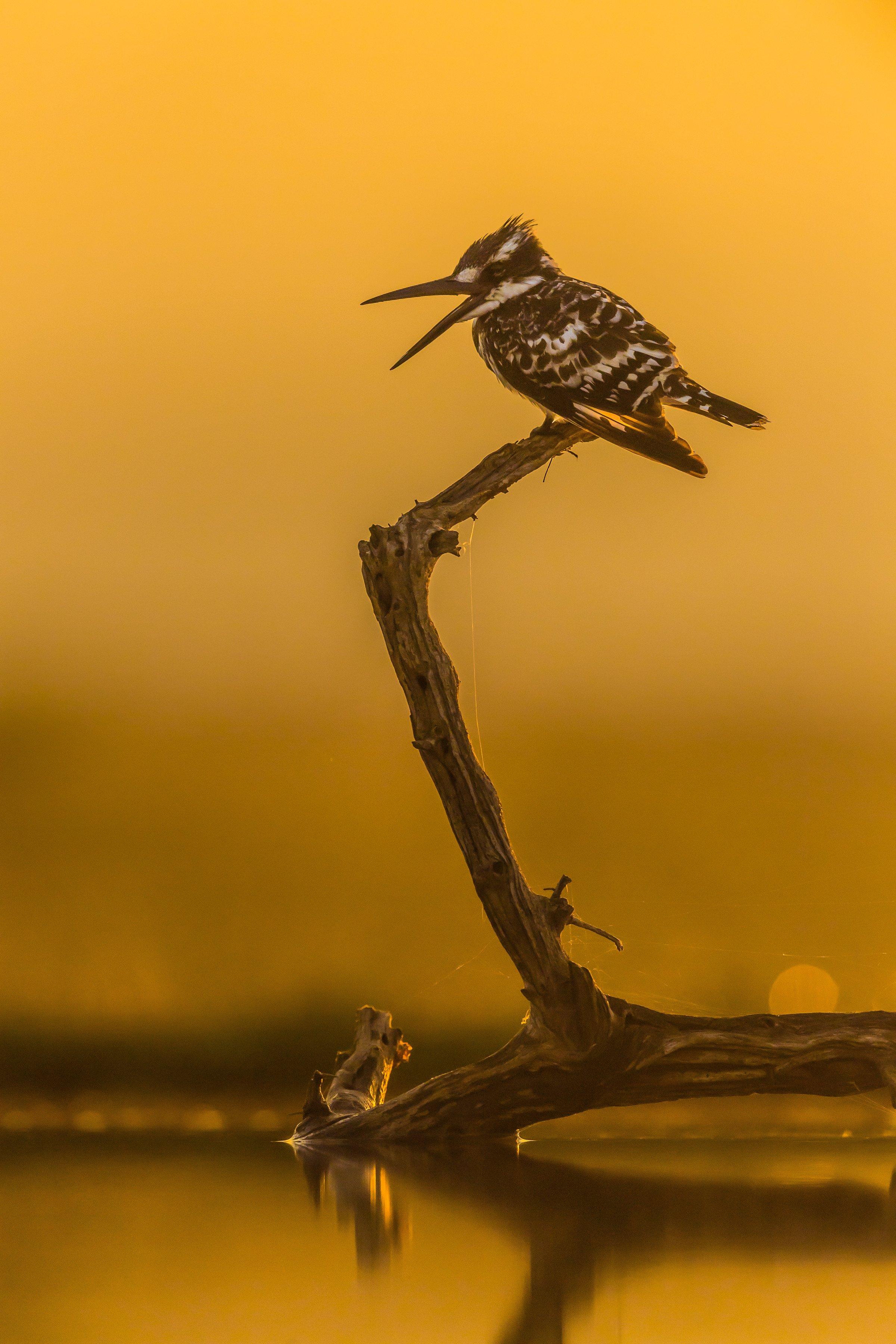 vogels afrika 9195