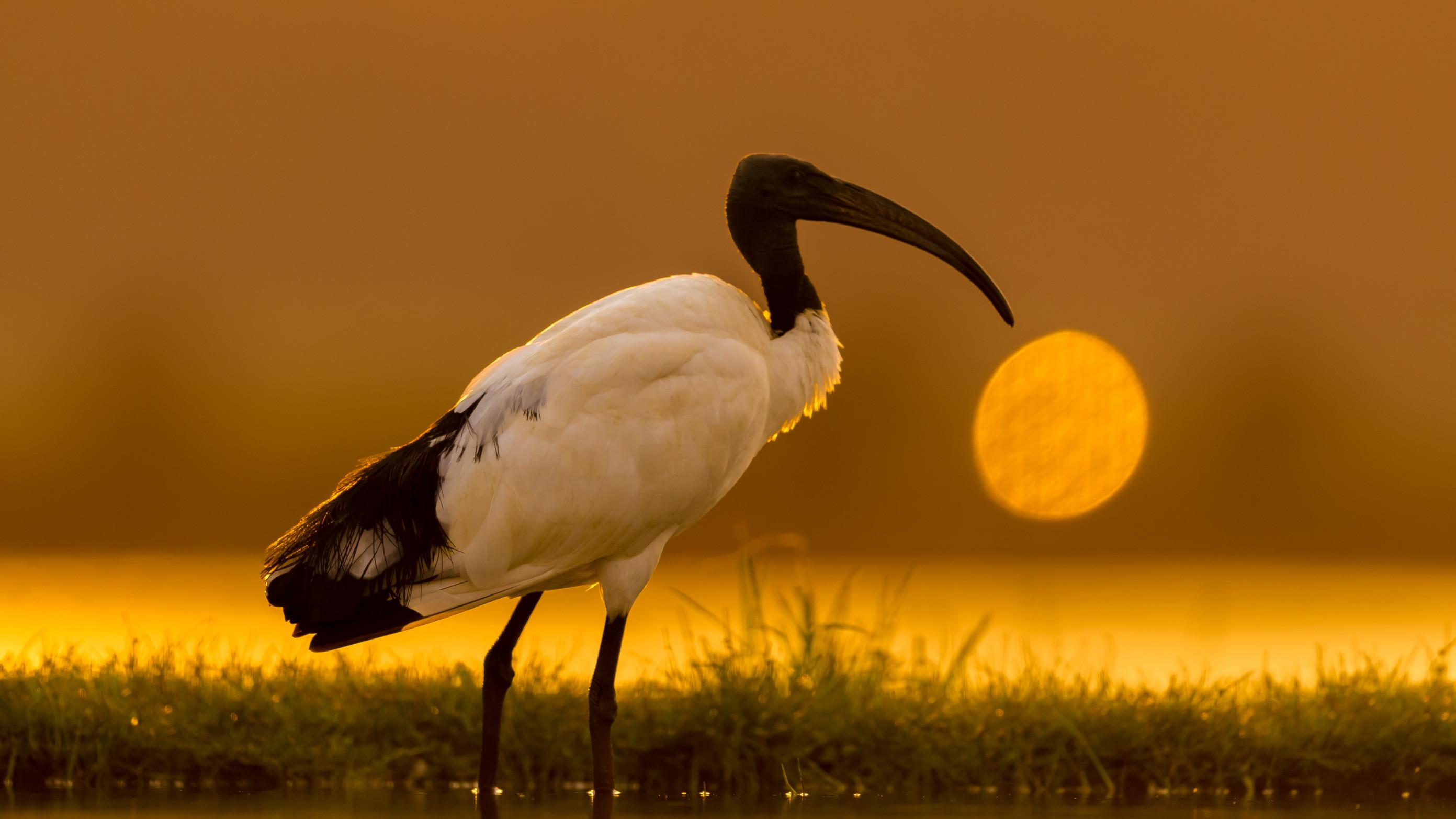 vogels afrika 2287
