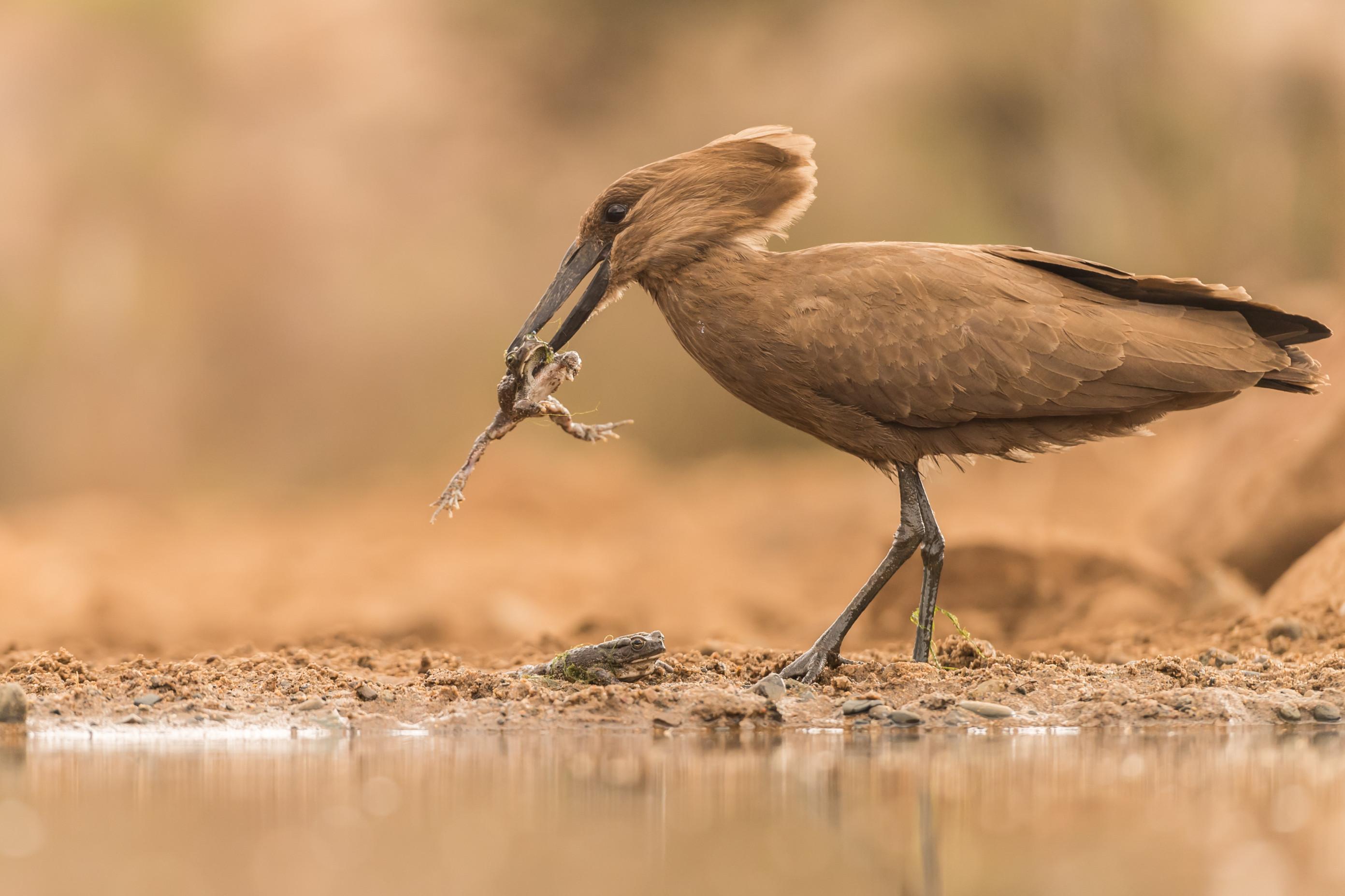 vogels afrika 3220
