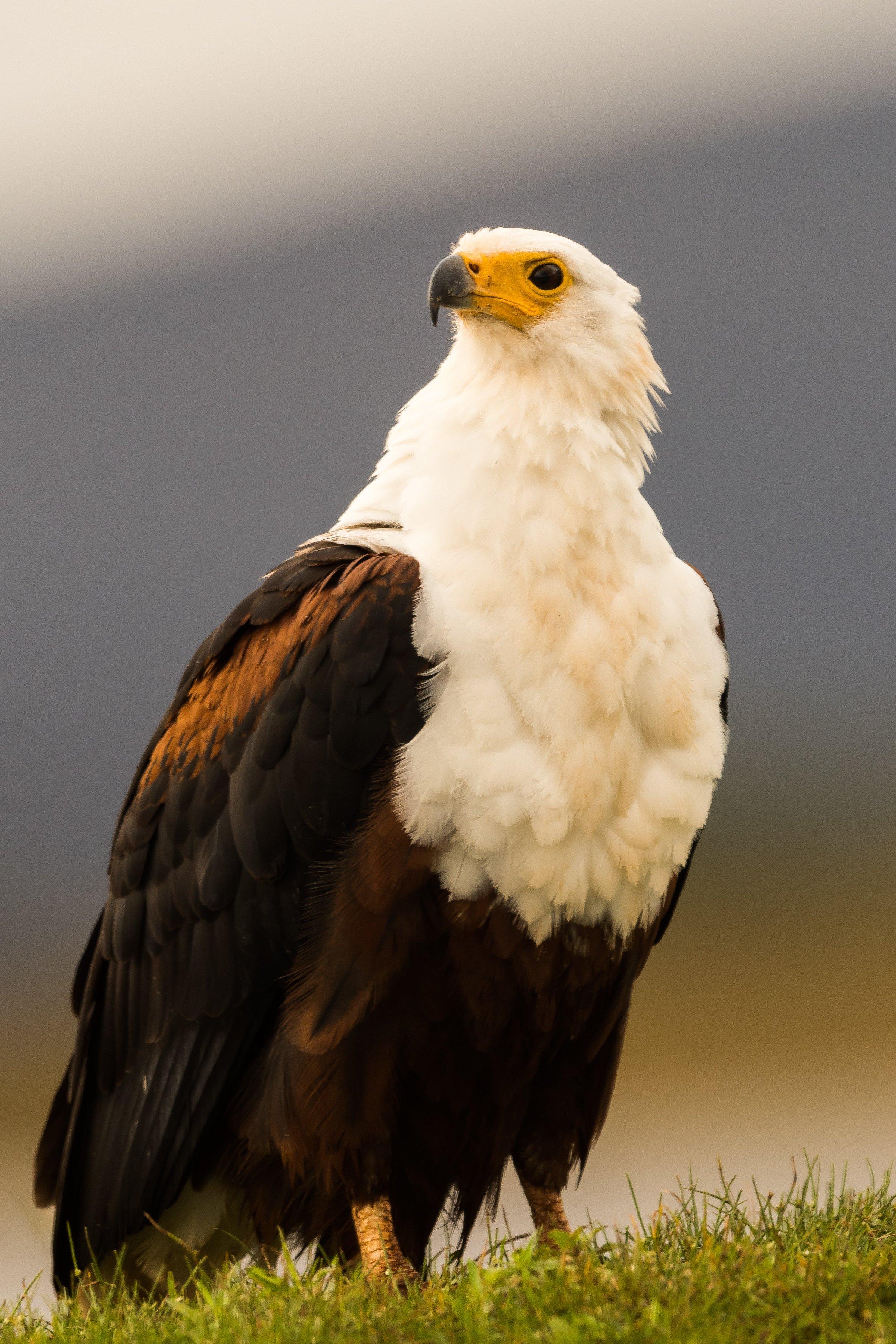vogels afrika 1770