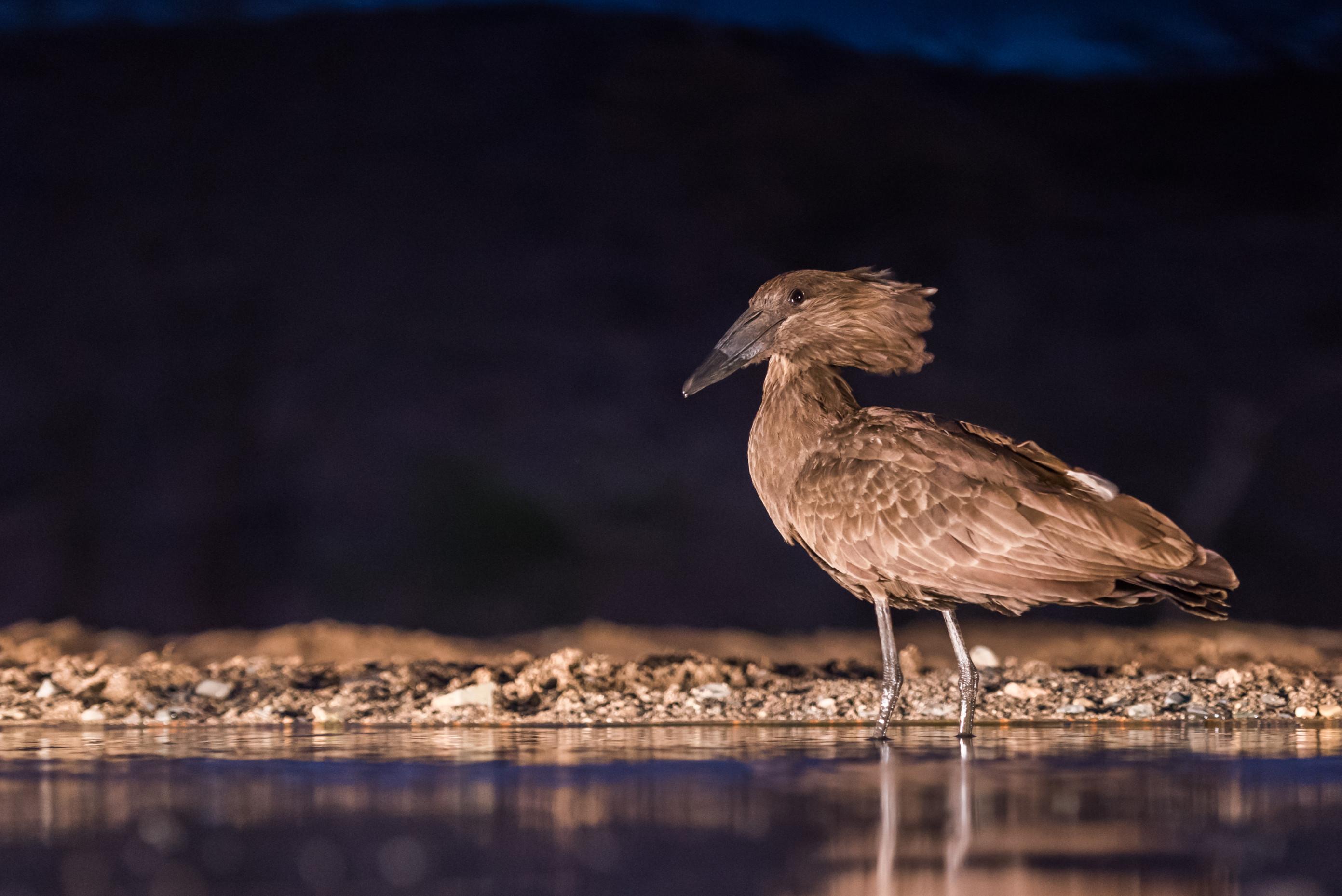 vogels afrika 4945