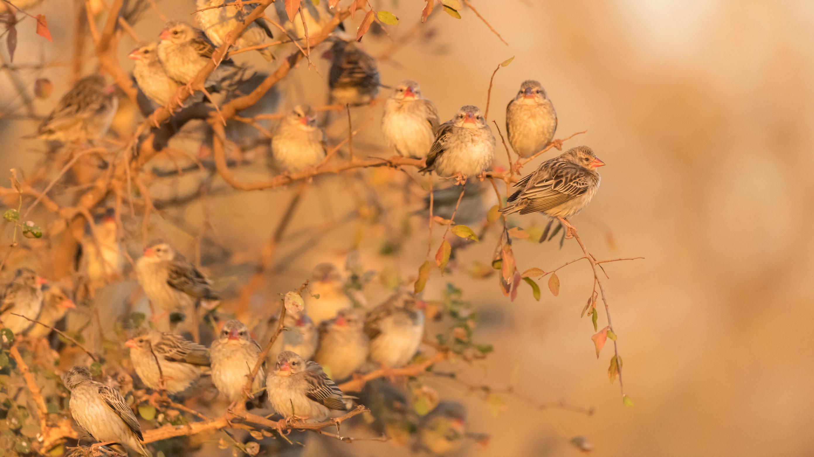 vogels afrika 2-10
