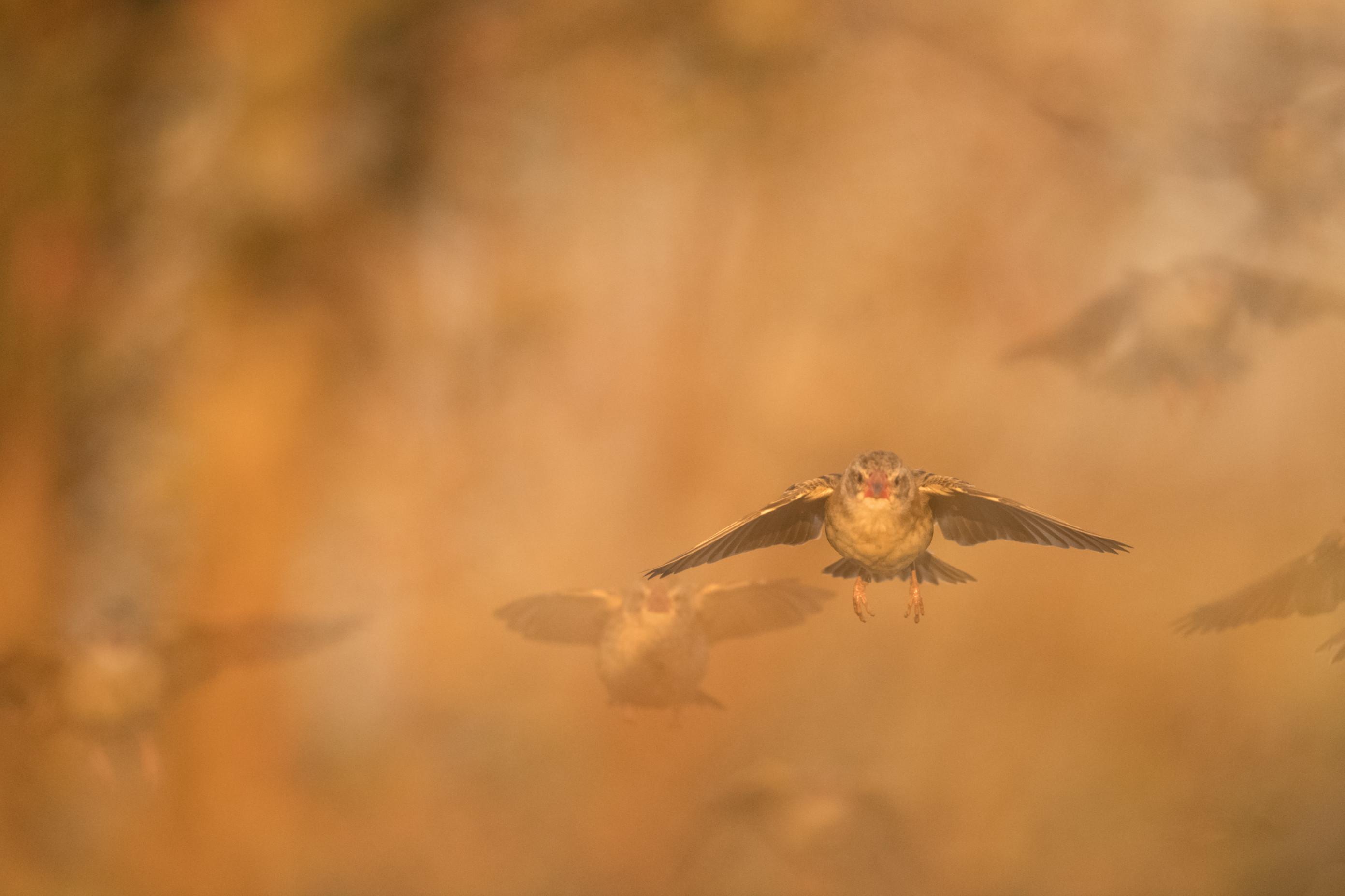 vogels afrika 2-301