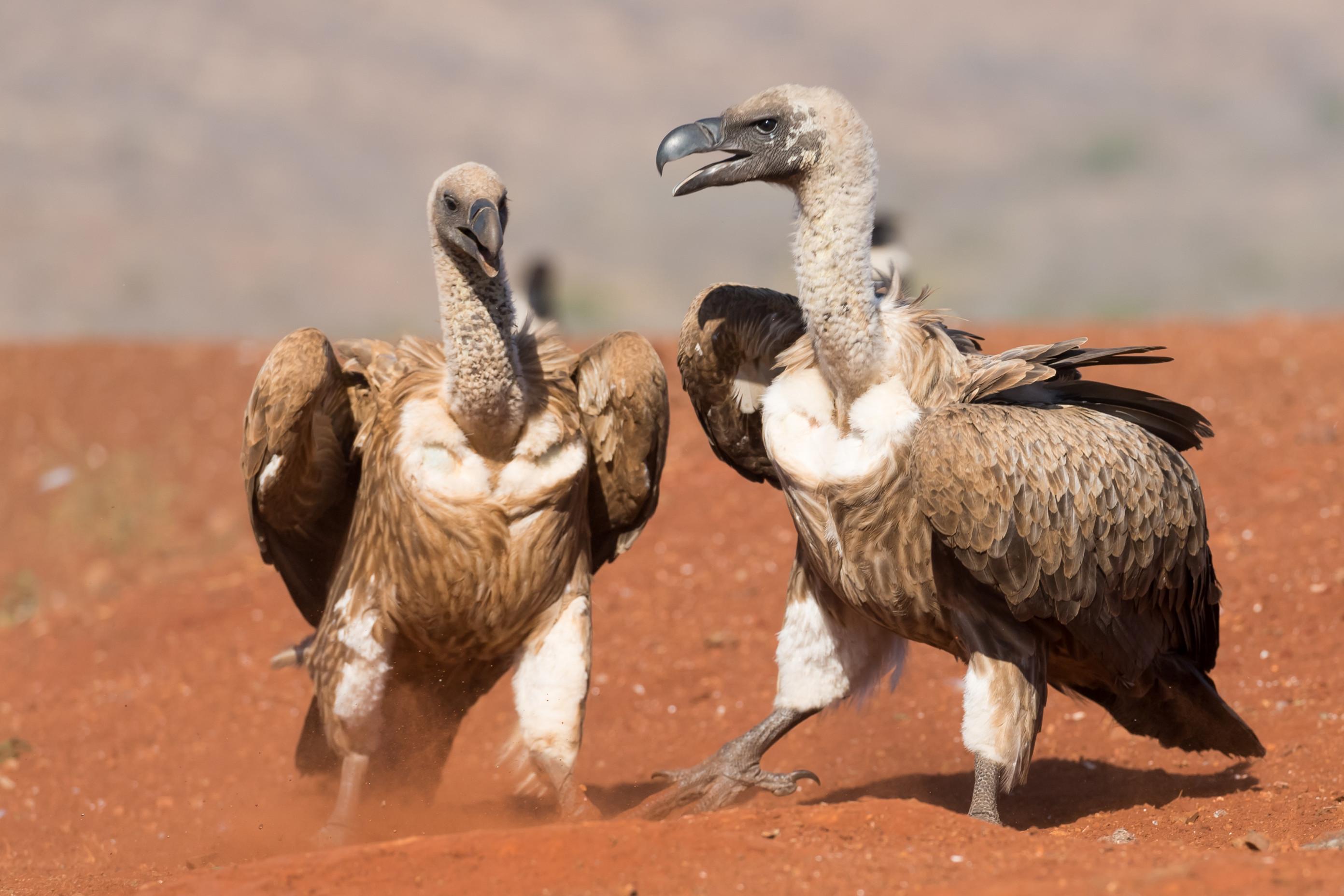 vogels afrika 6330