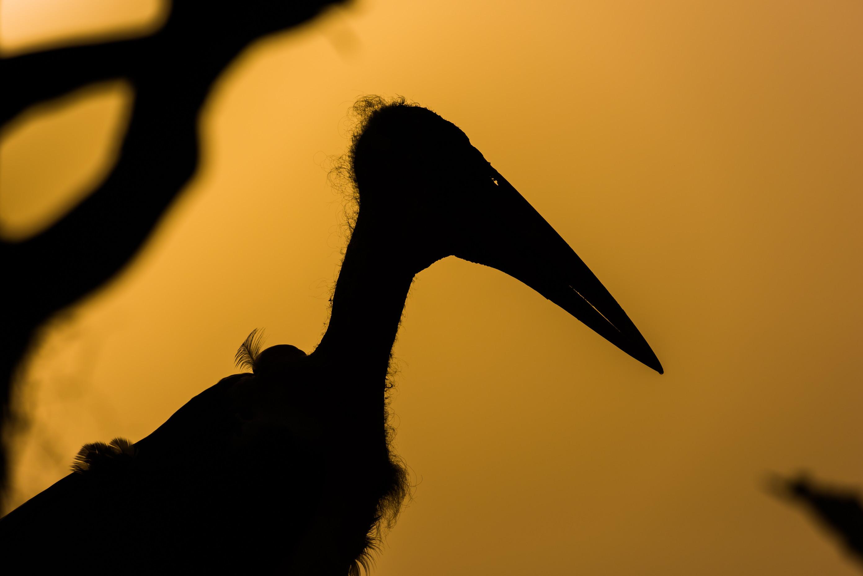 vogels afrika 6792