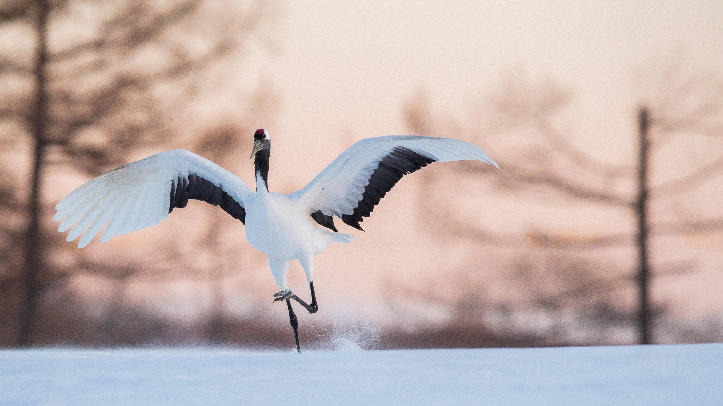 vogels Japan 6526