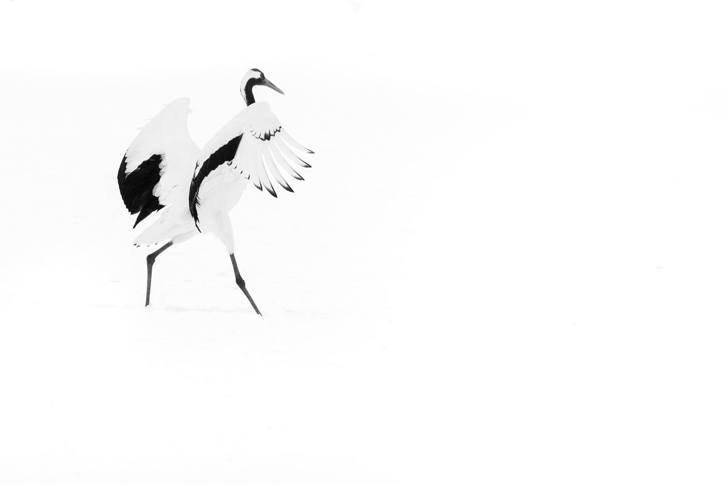 vogels Japan 8754
