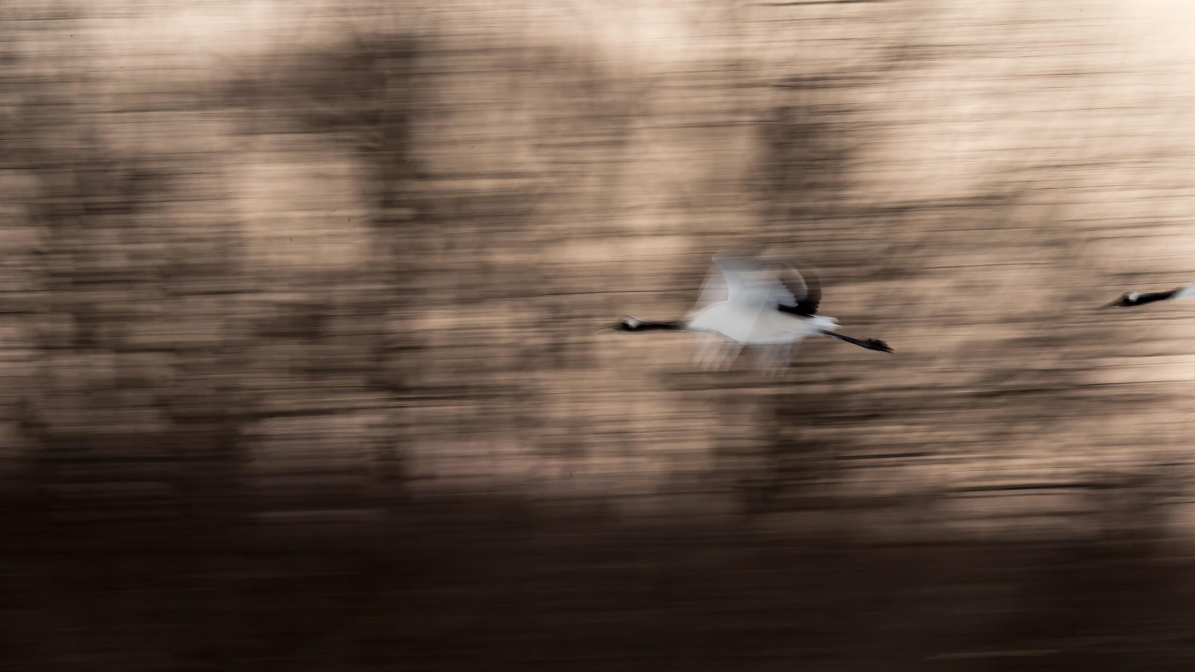 vogels Japan 8863