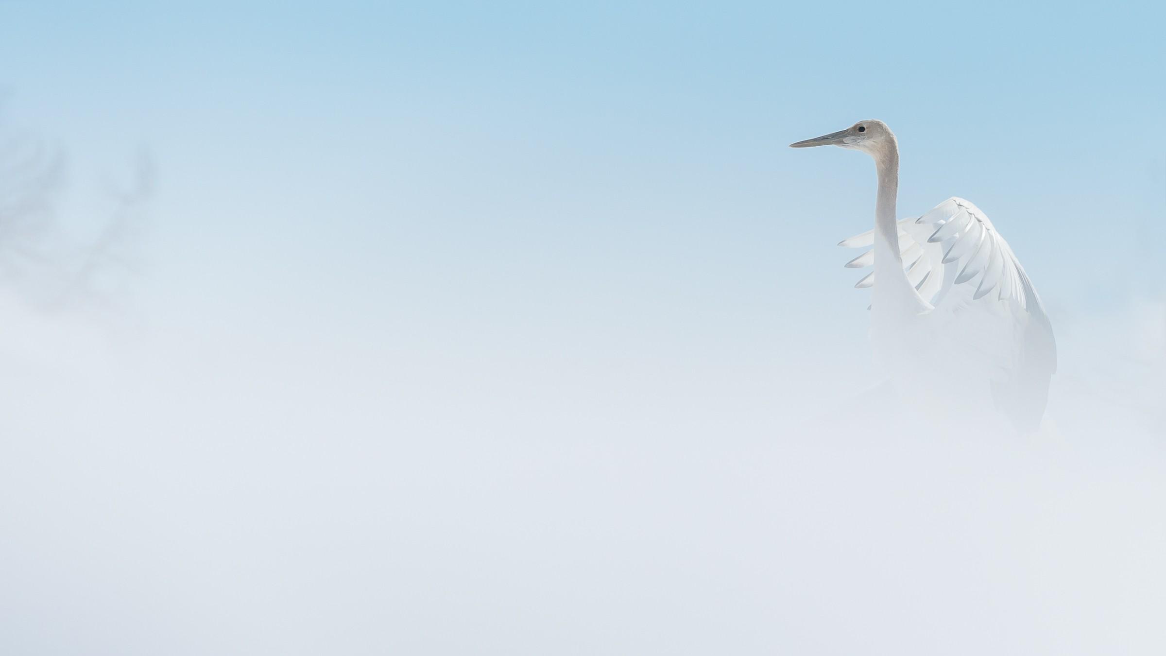 vogels Japan 3737