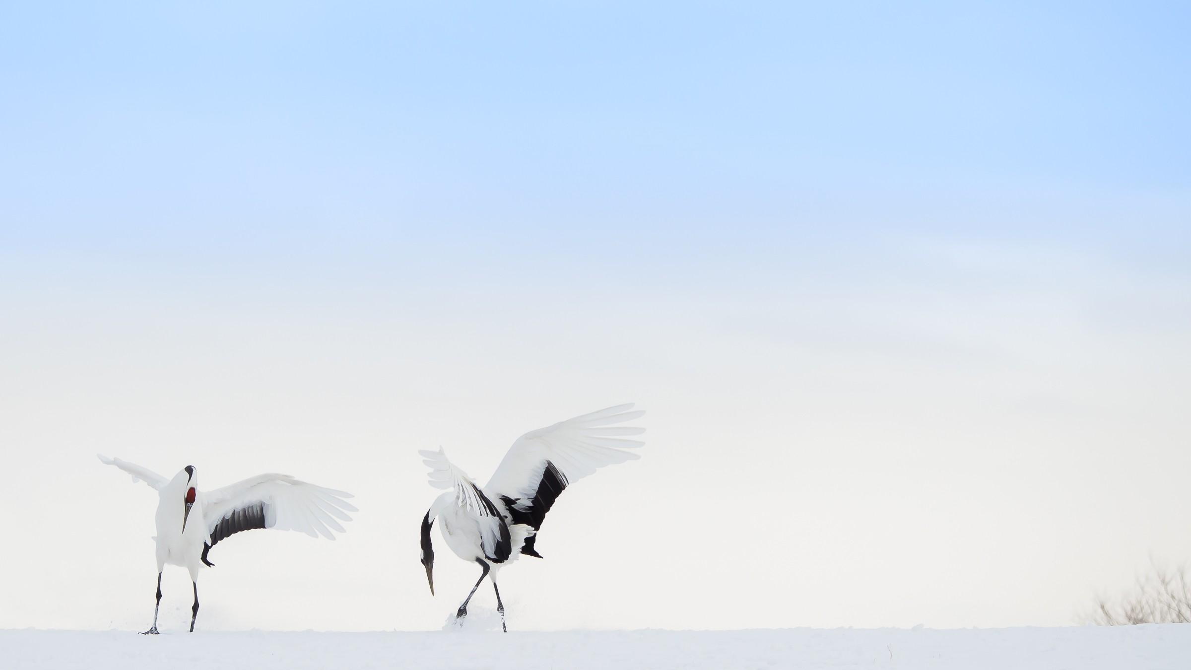 vogels Japan 4712