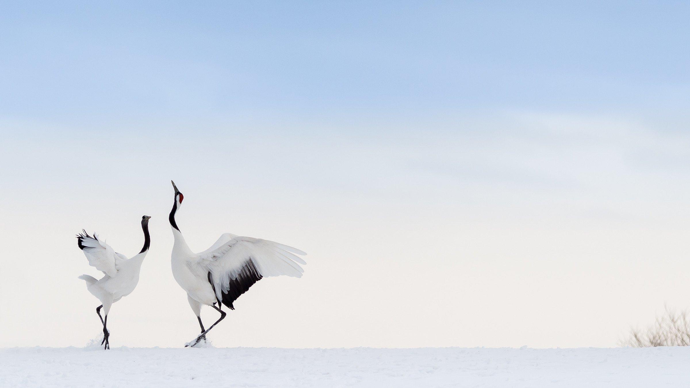 vogels Japan 4719