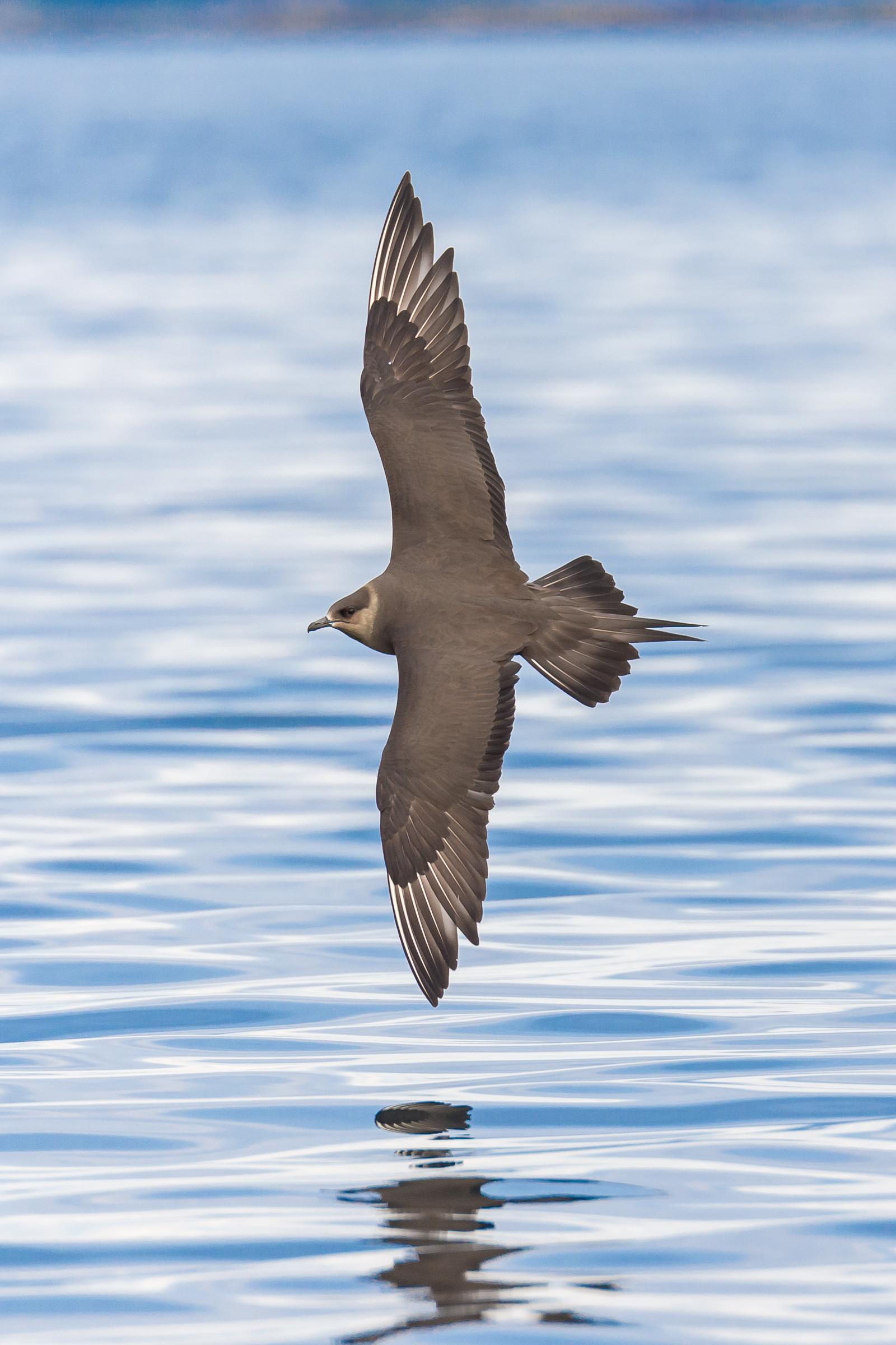 vogels BDZ jager 4675