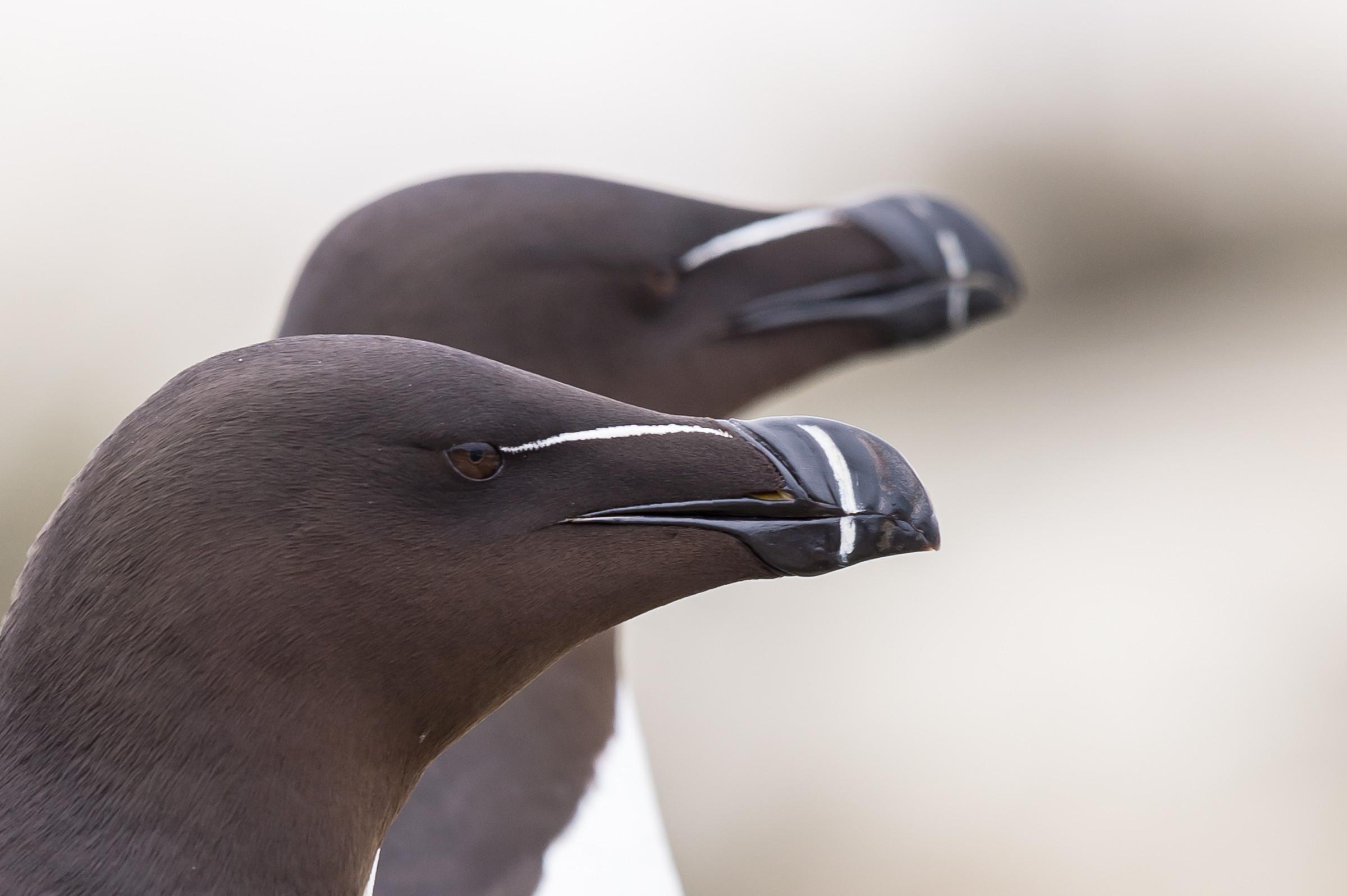 vogels BDZ alk 1569