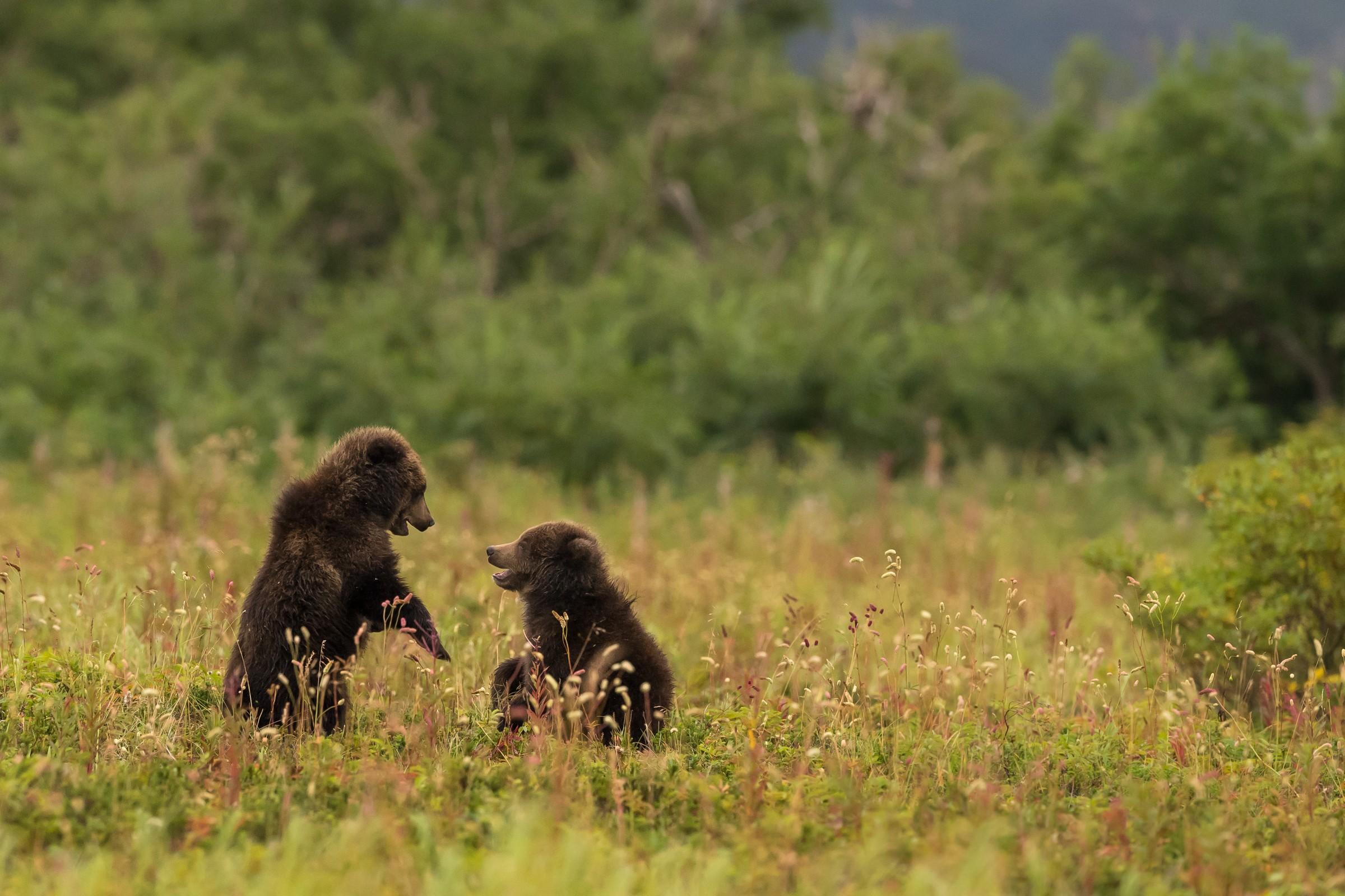 wildlife kamchatka 2595