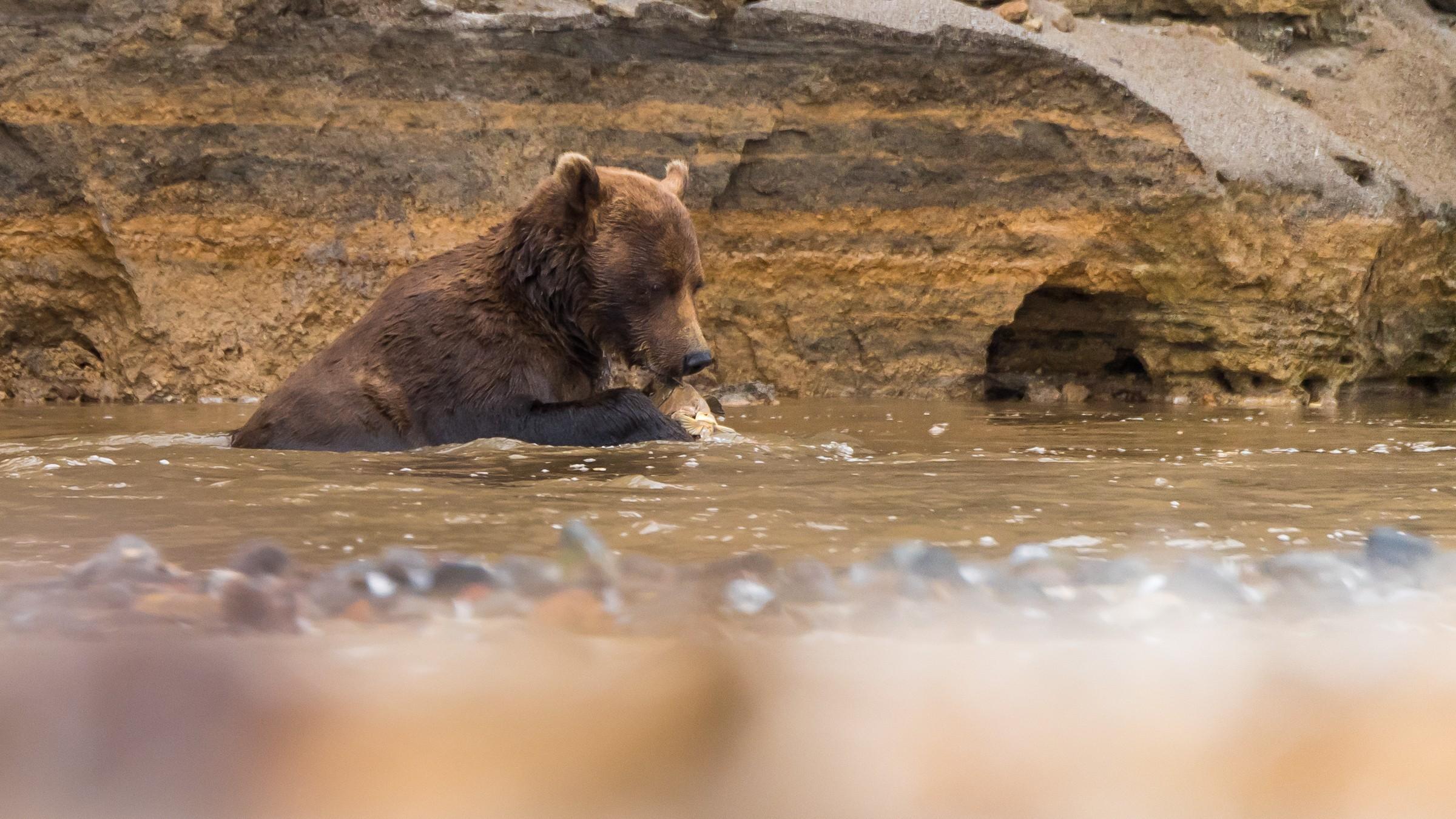 wildlife kamchatka 3071