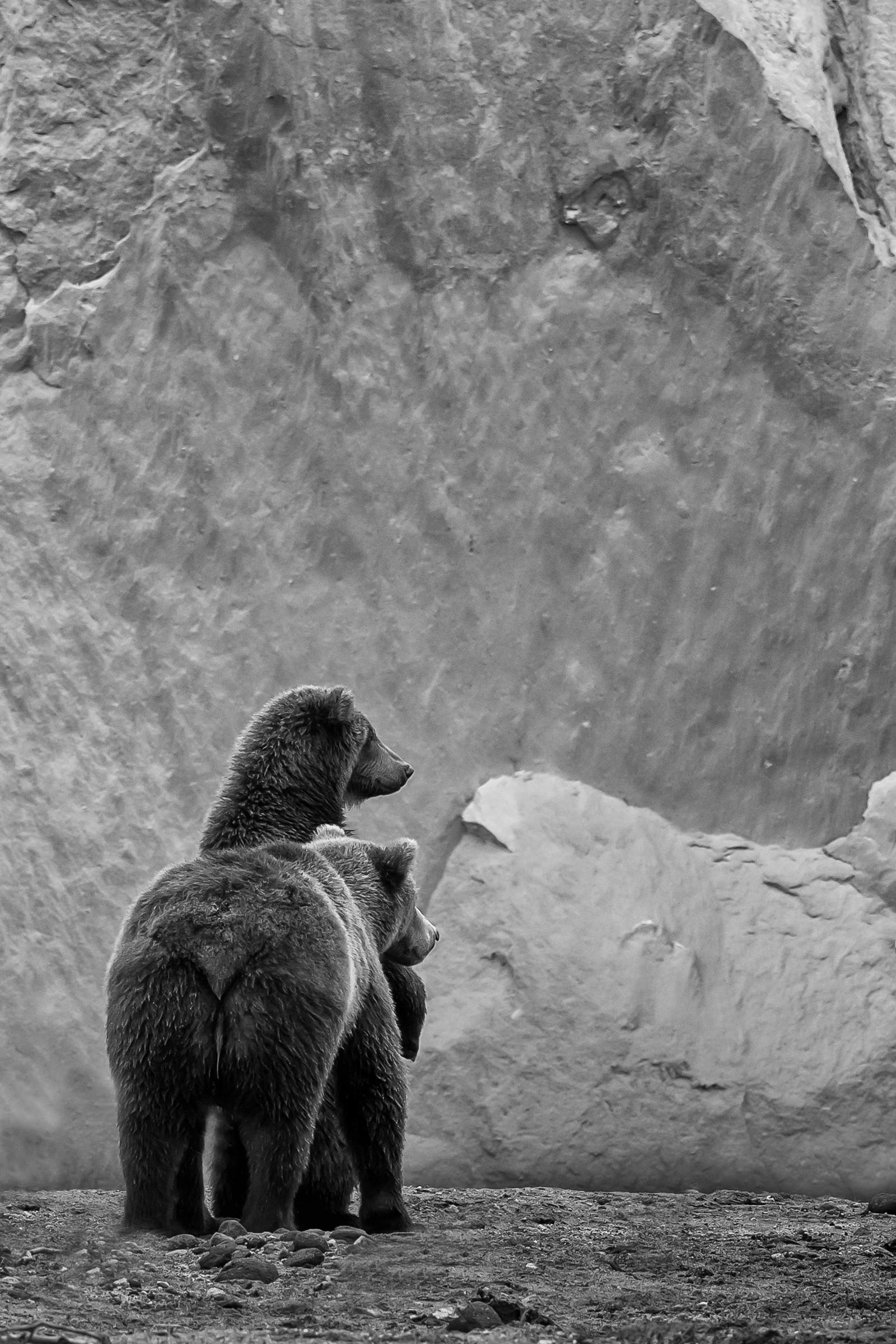 wildlife kamchatka 3470