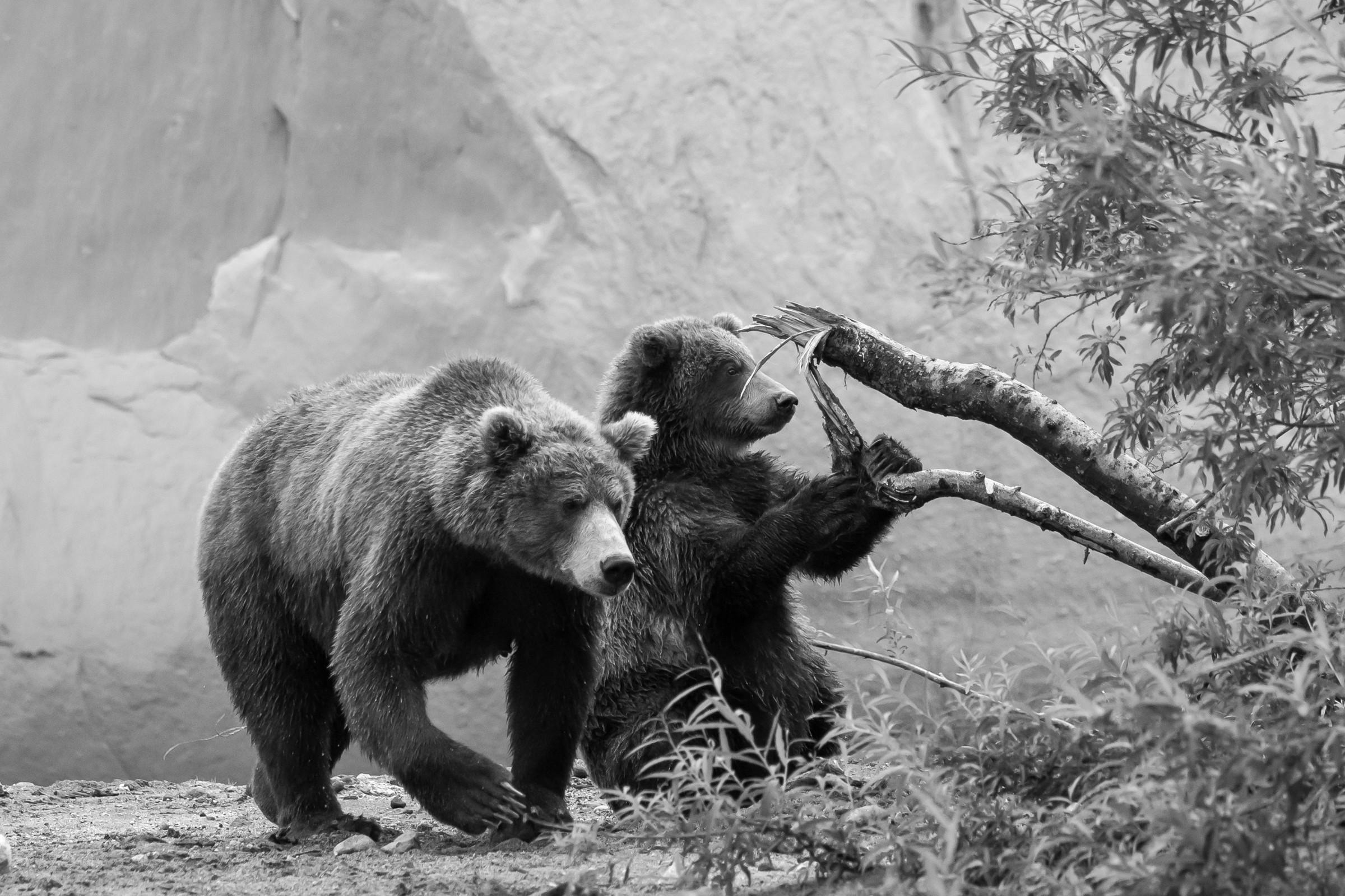 wildlife kamchatka 3494
