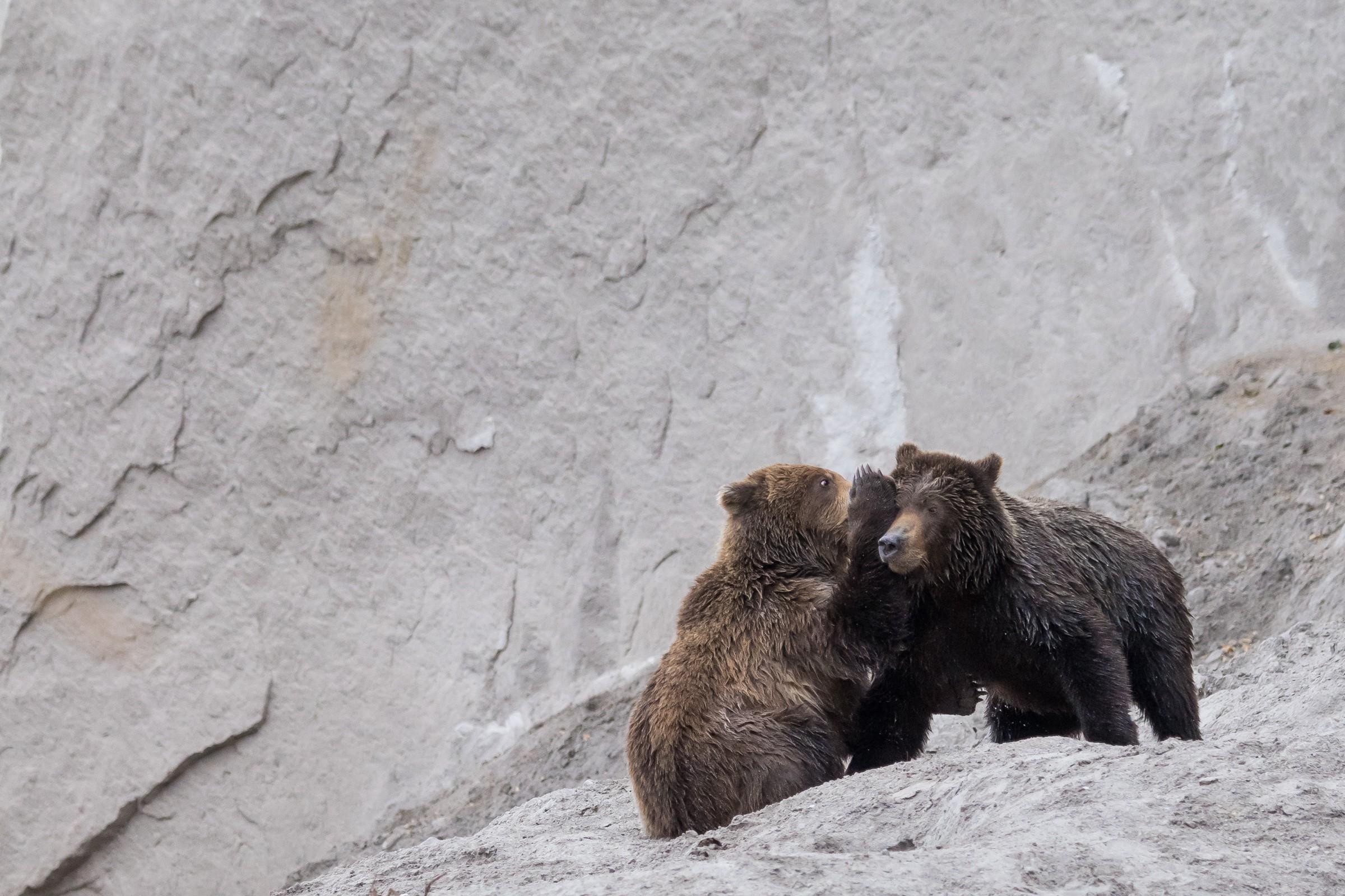 wildlife kamchatka 3931