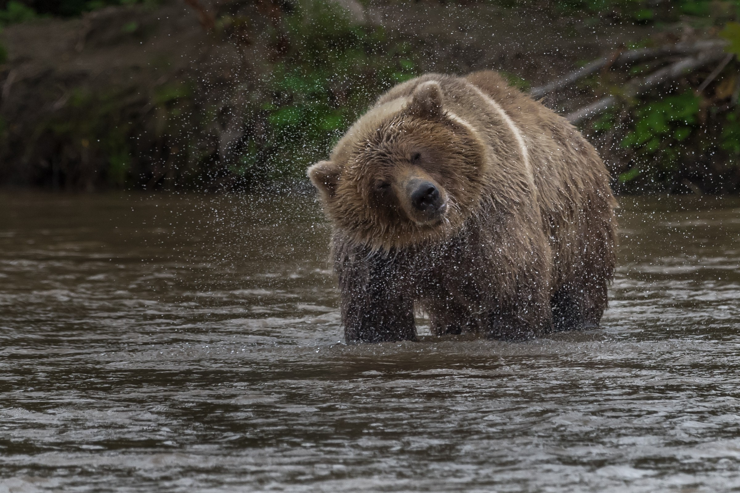 wildlife kamchatka 4912