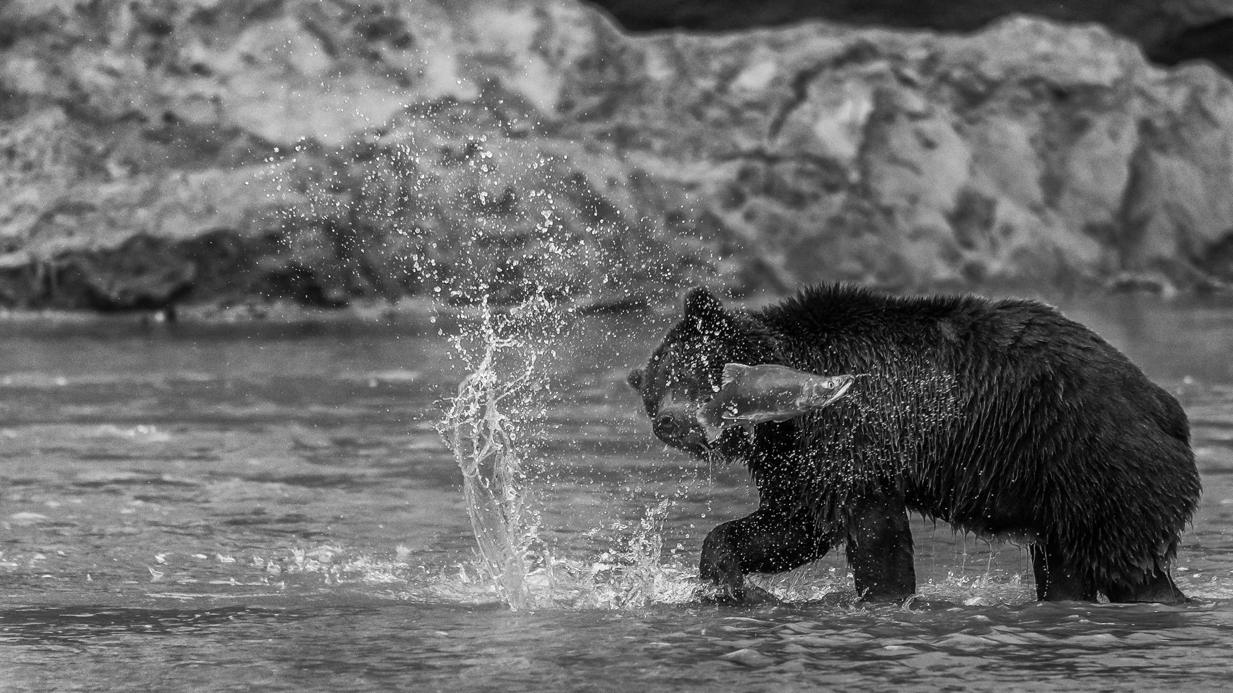 wildlife kamchatka 4381