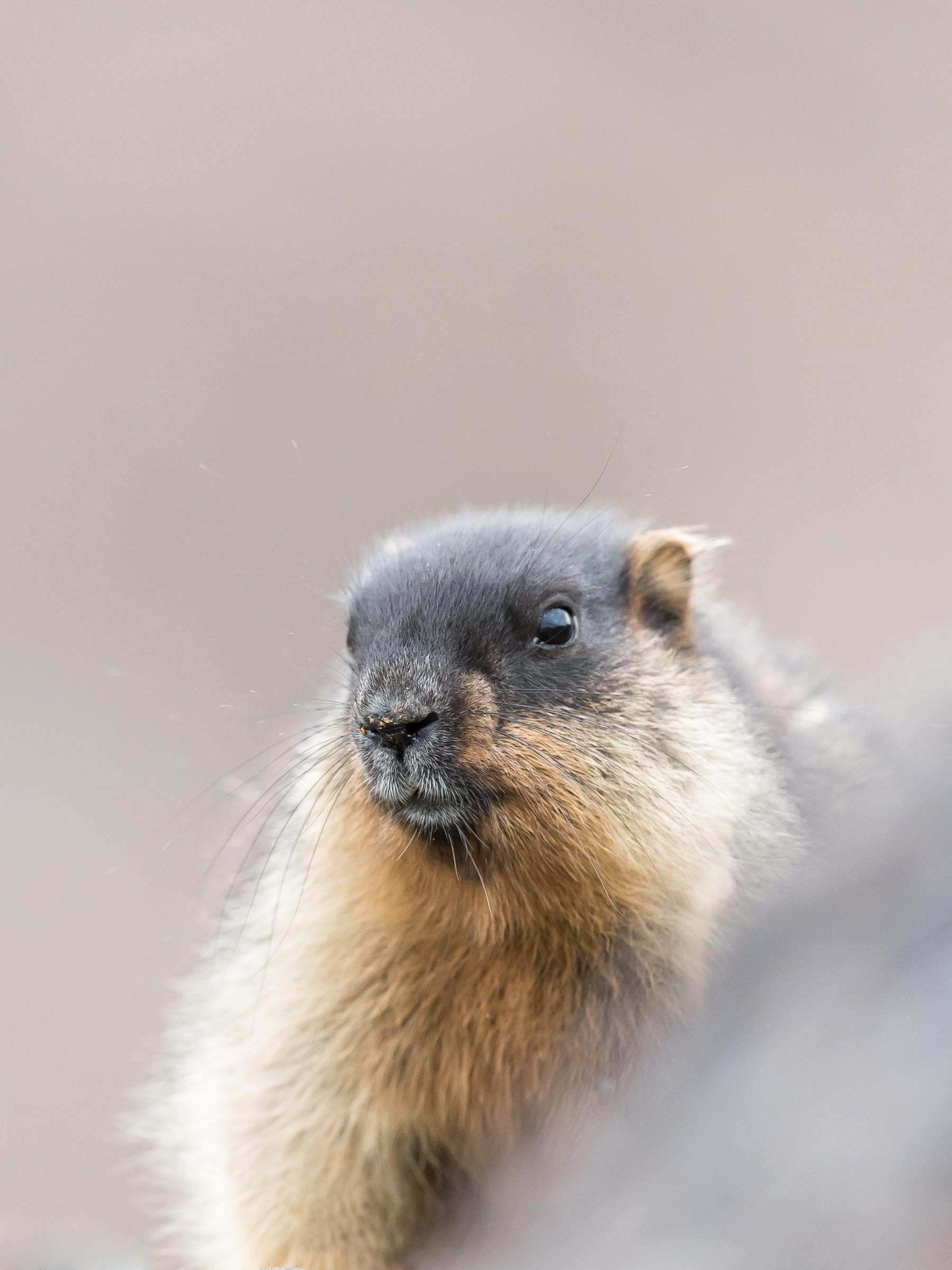 wildlife kamchatka 5479
